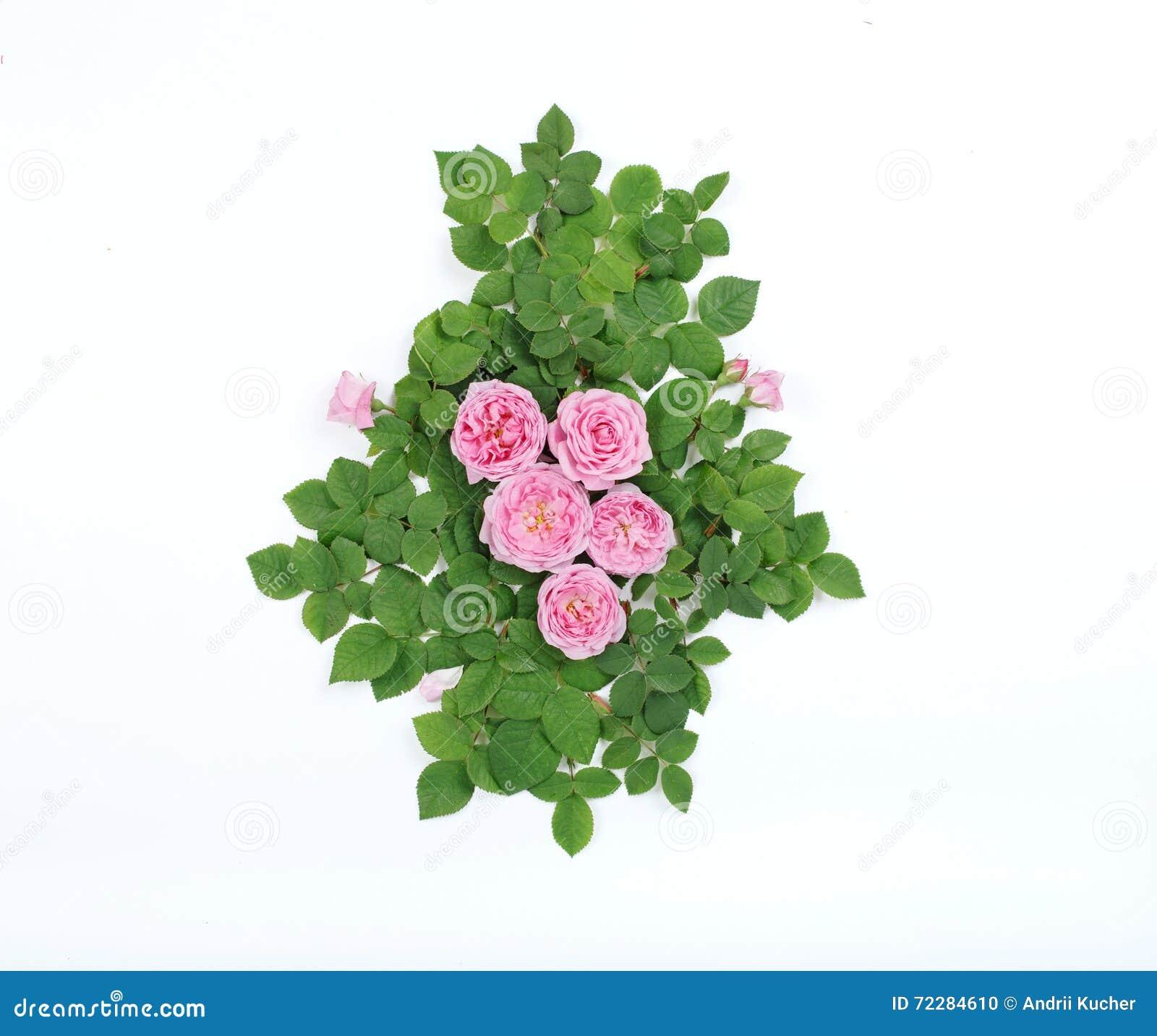 Download Красочная картина сделанная свежих роз Стоковое Фото - изображение насчитывающей карточка, украшение: 72284610