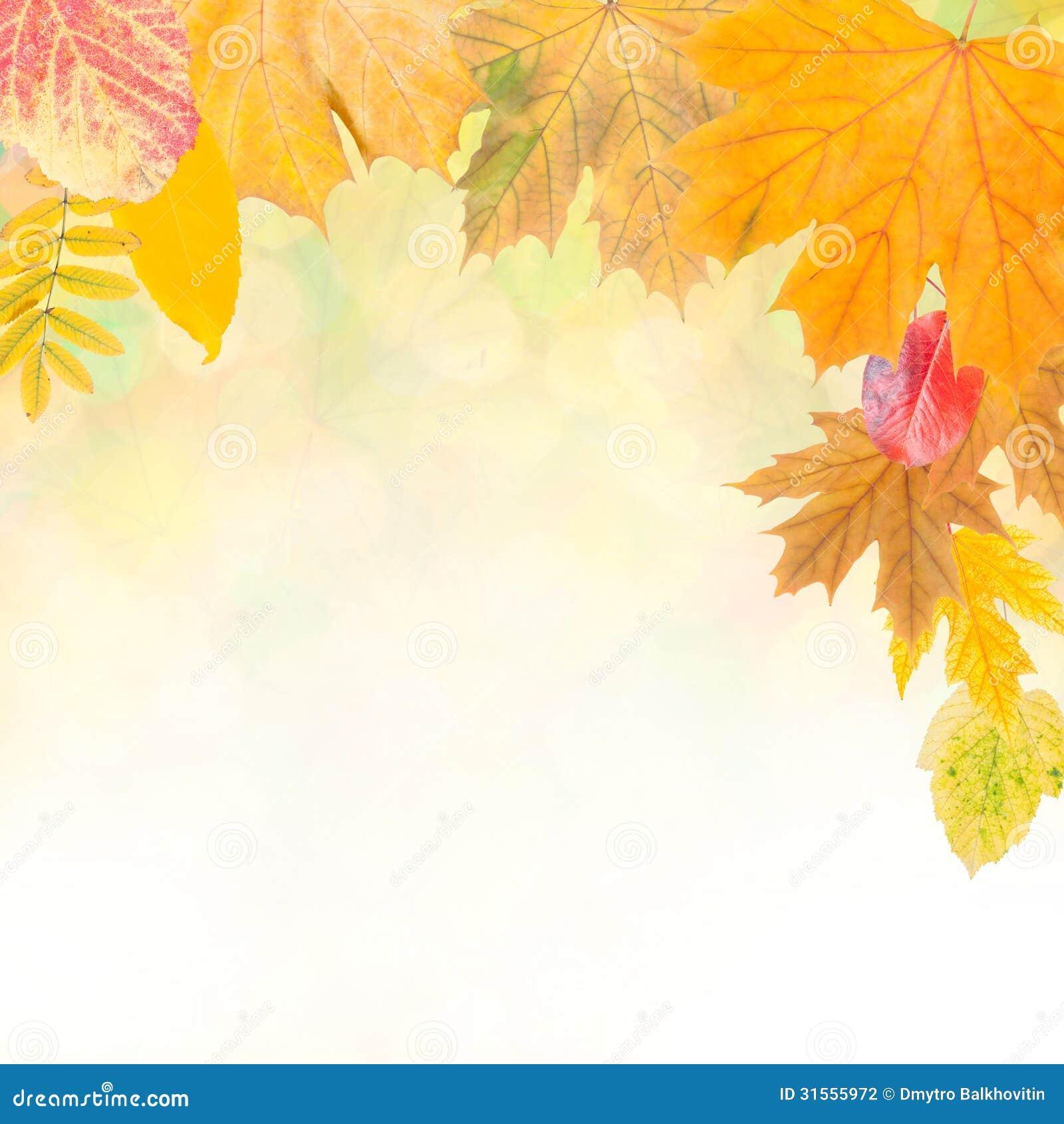 Красочная осень background-5