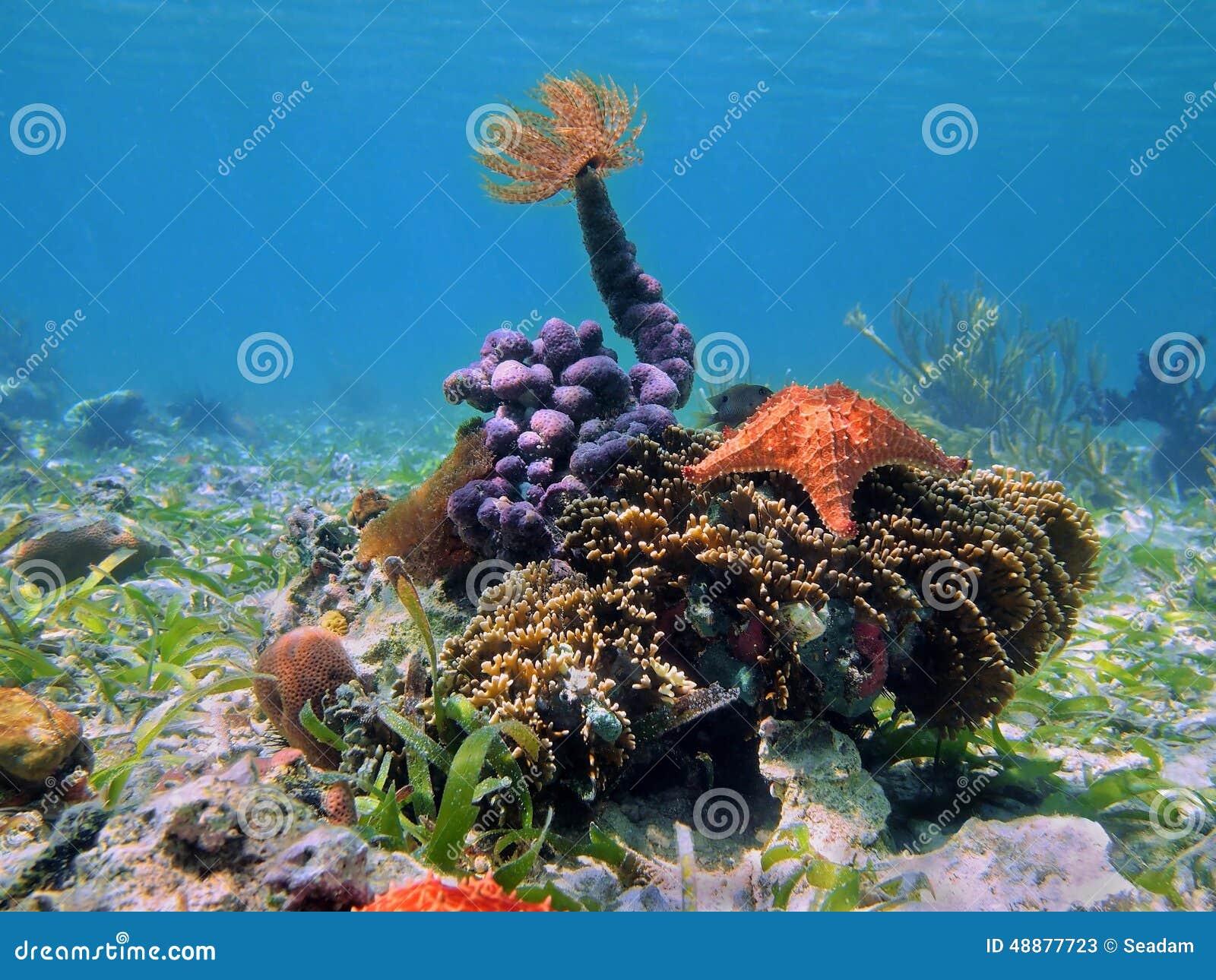Красочная тропическая морская жизнь подводная в Вест-Инди