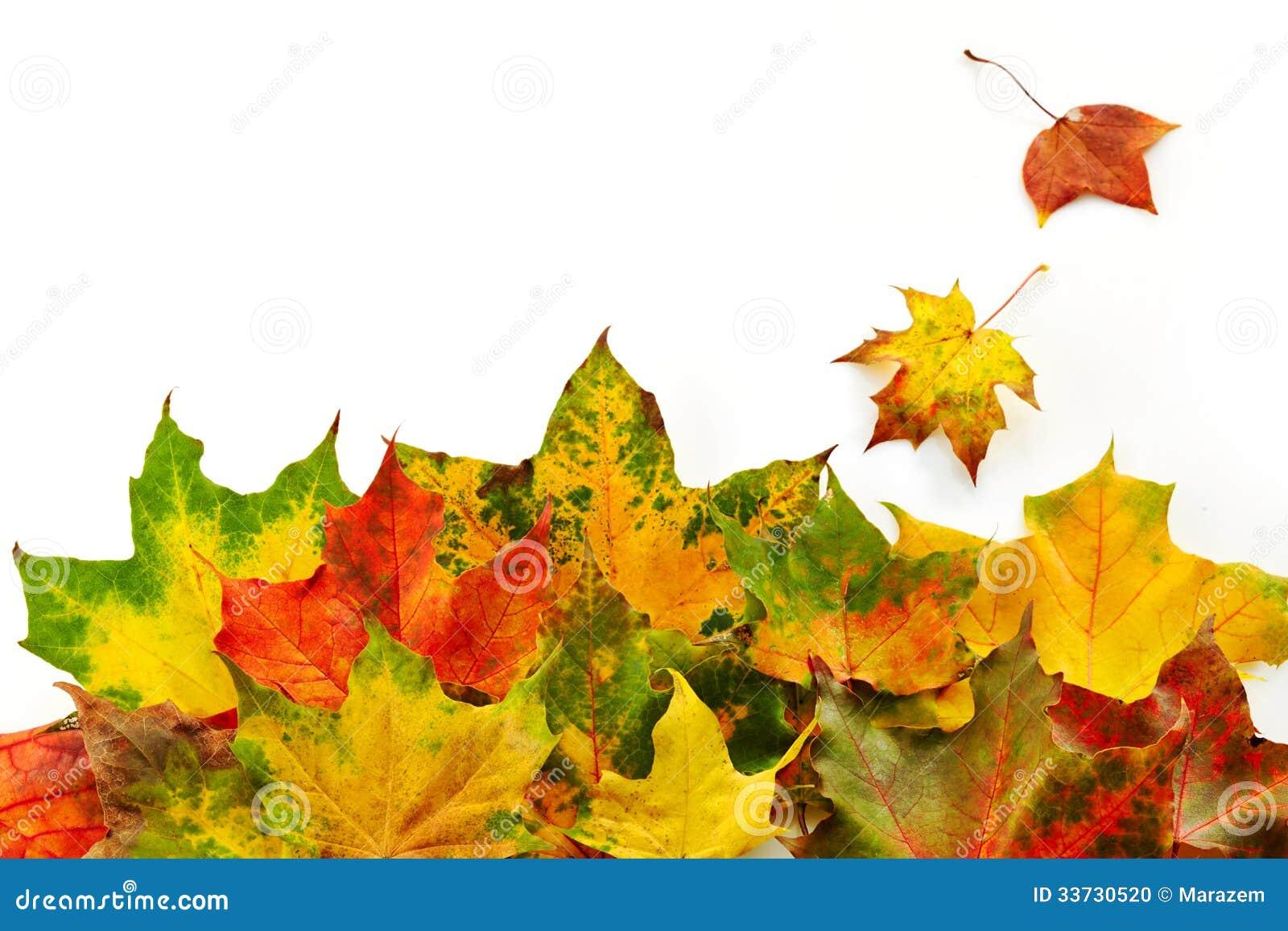 Цветастые листья осени