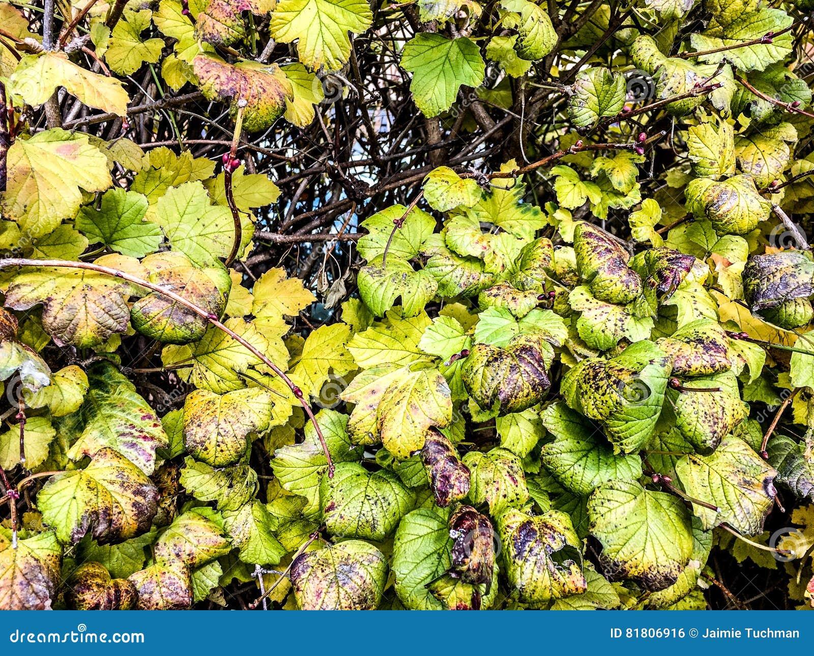 красочные листья падения изменяя цвет