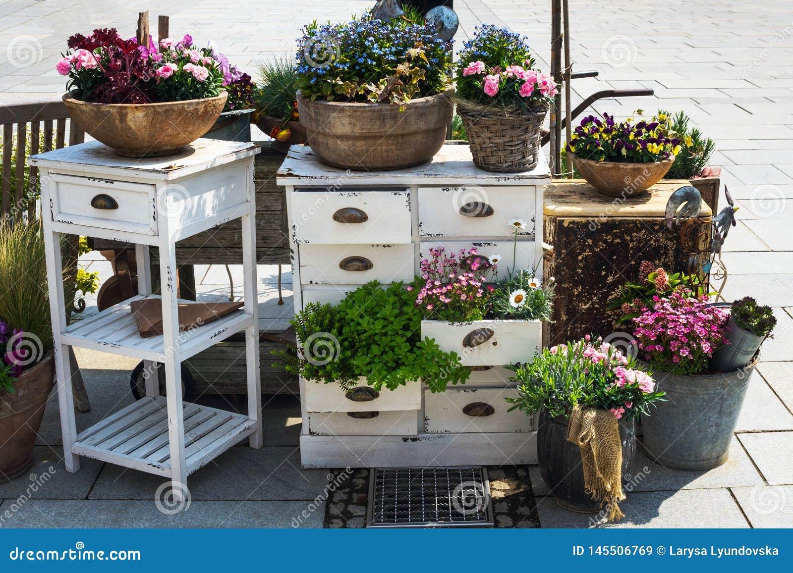 Красочные кусты цветков весны, засаженные в старых баках, ведрах и кор