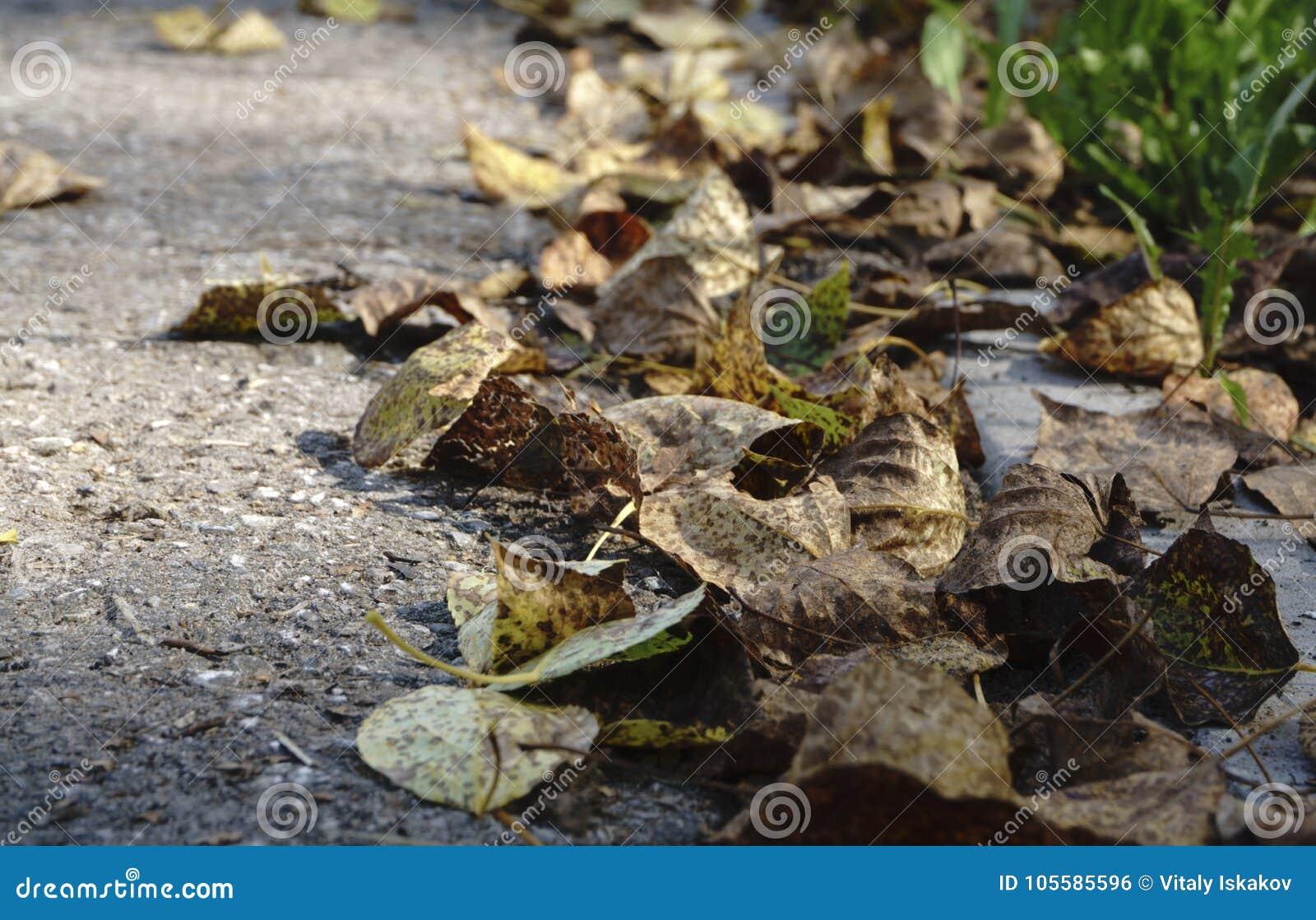 Красочные листья осени на холодном открытом море с отражениями солнца, золоте струятся Концепция осени приходила