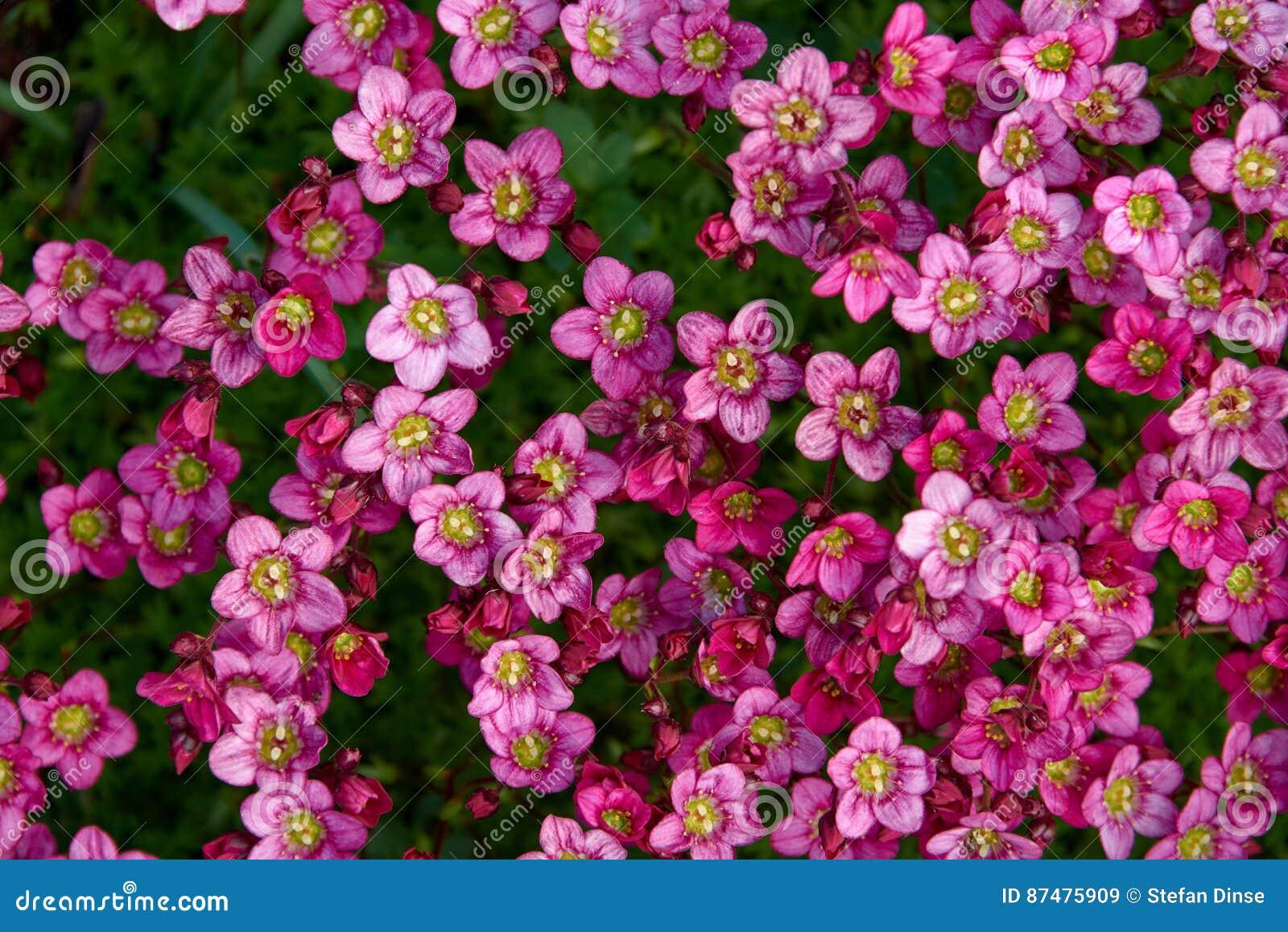 красочные малые цветки сада