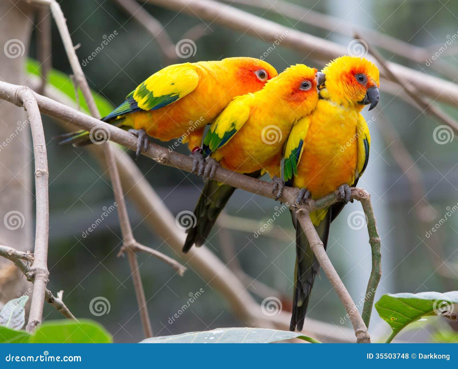 Красочные птицы