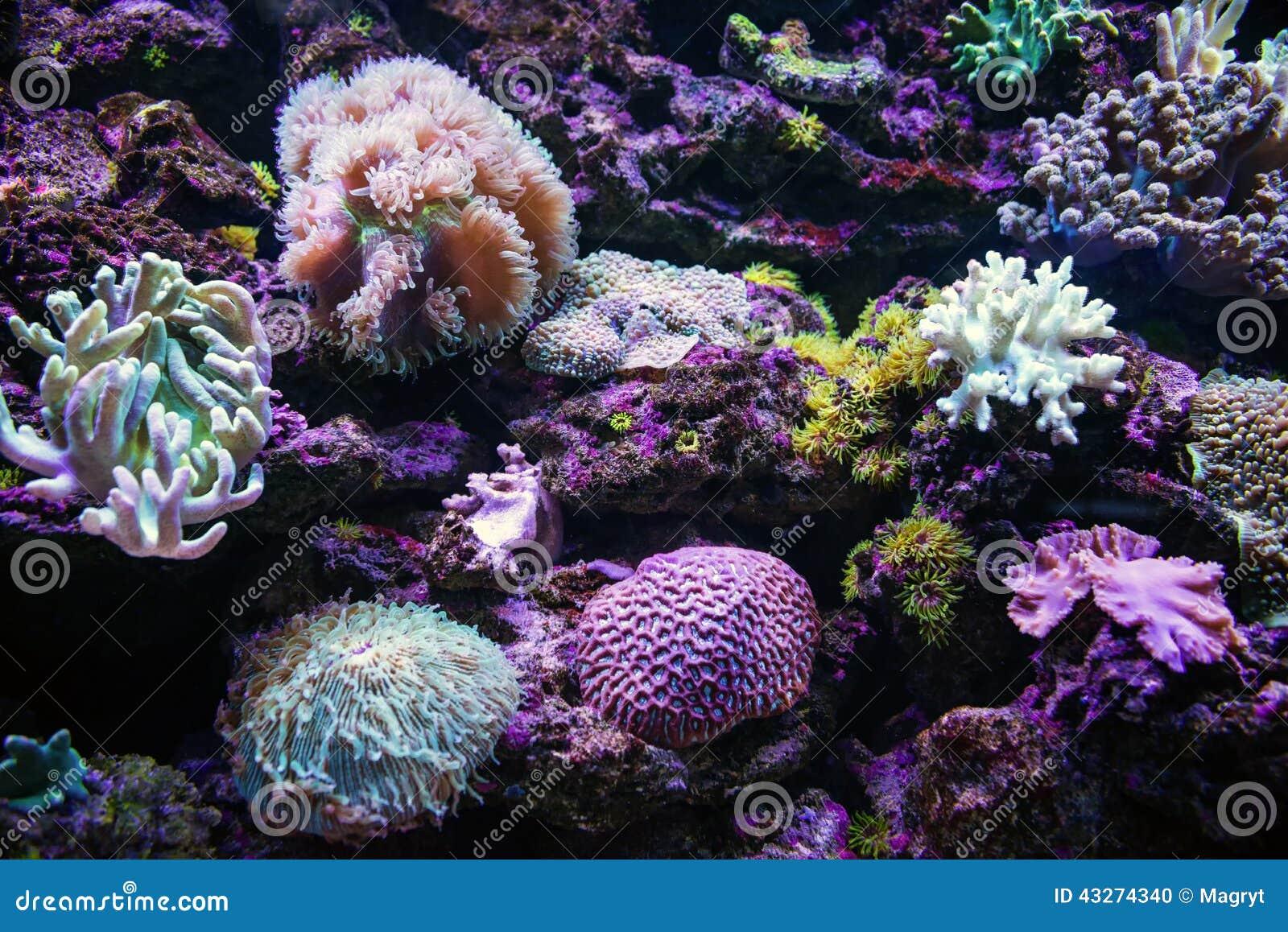 Красочные тропические коралловые рифы подводно