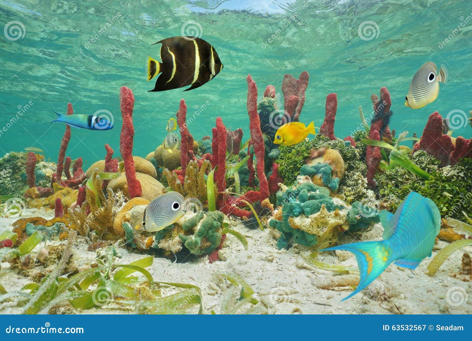 Красочные тропические рыбы и морская флора и фауна подводные