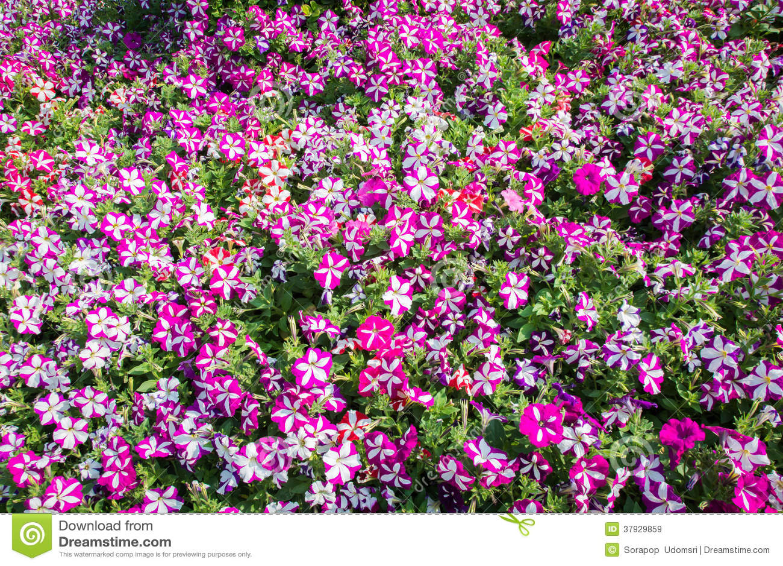 Красочные цветки на саде