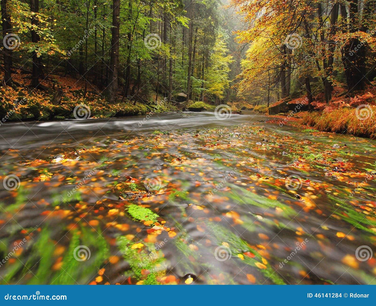 Красочный гравий на банке на реке горы осени Согнутые ветви с последними листьями надводными