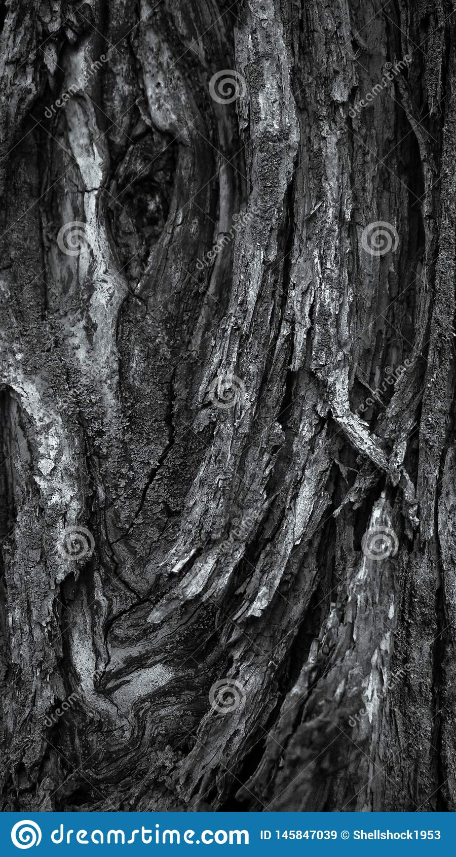 Красочный грубый макрос крупного плана текстуры дерева