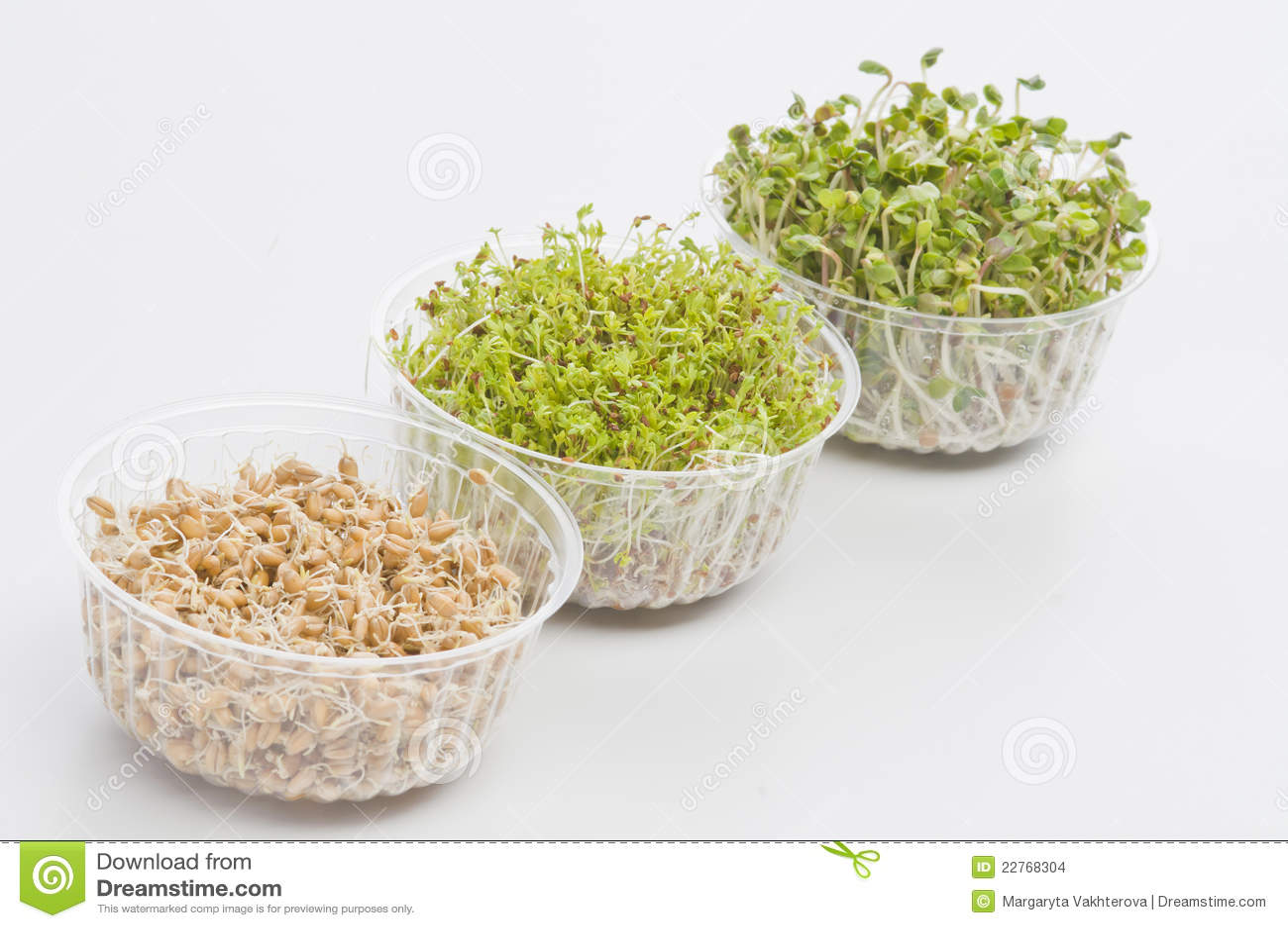 Как прорастить семена редиса в домашних условиях