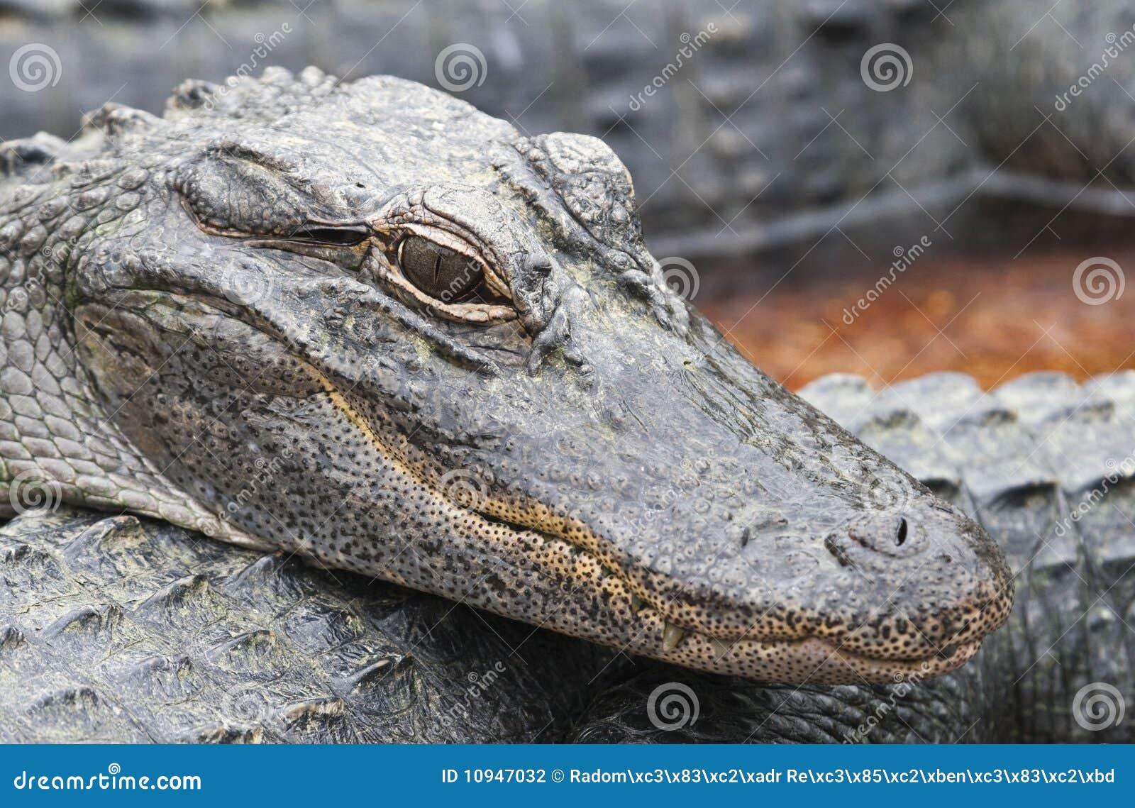 крокодилы молодые