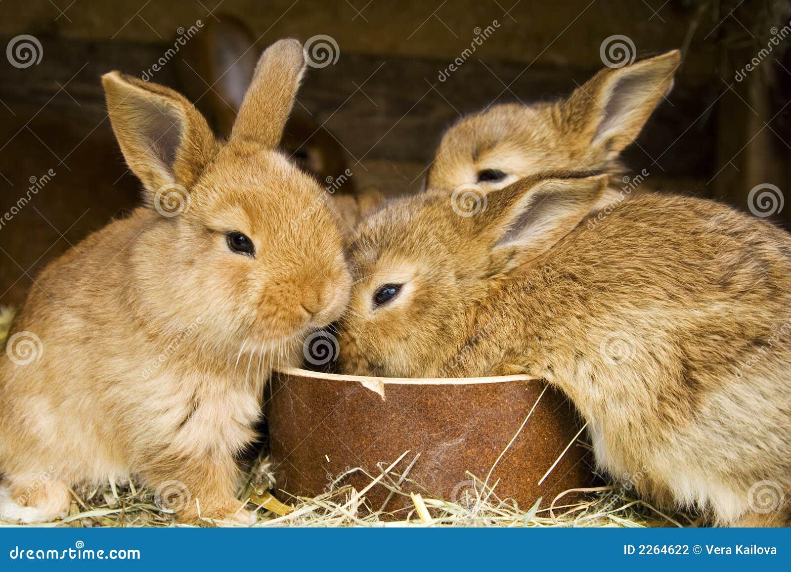 кролики малые