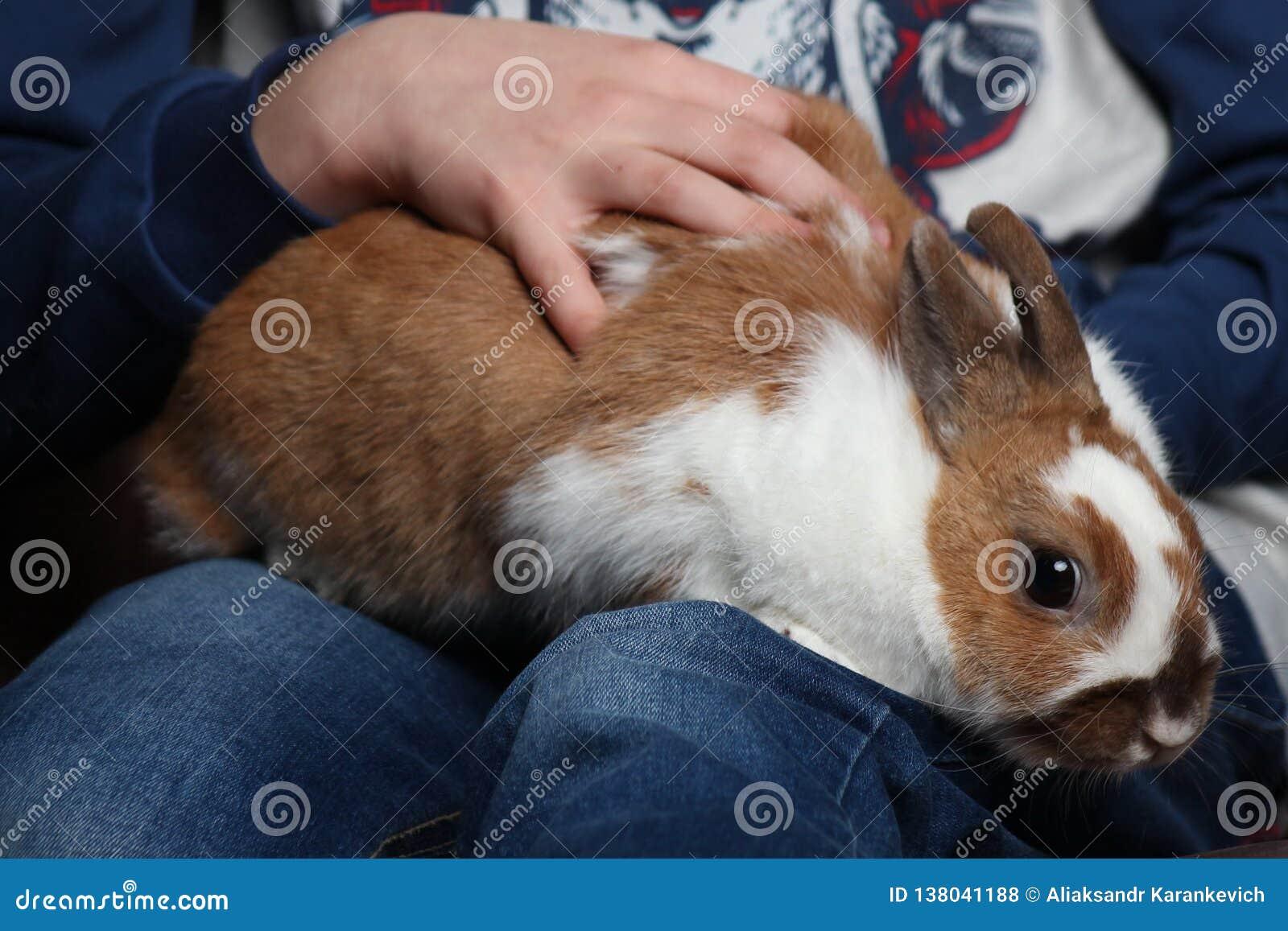 Кролик сидя на руках ребенка забота для животных, младенец petting зайчик