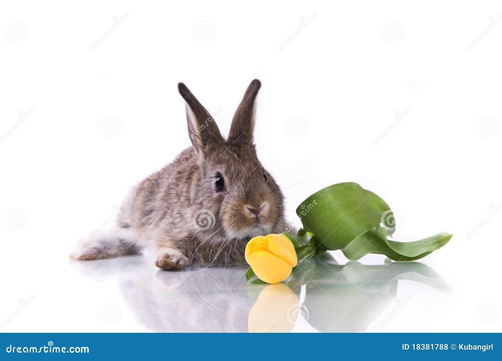 кролик цветков маленький