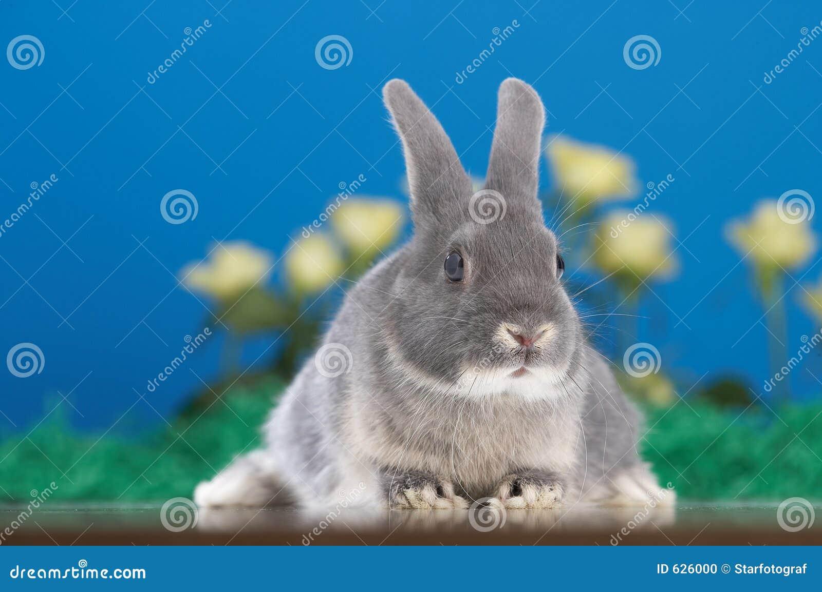 Download кролик стоковое фото. изображение насчитывающей сад, gnawer - 626000