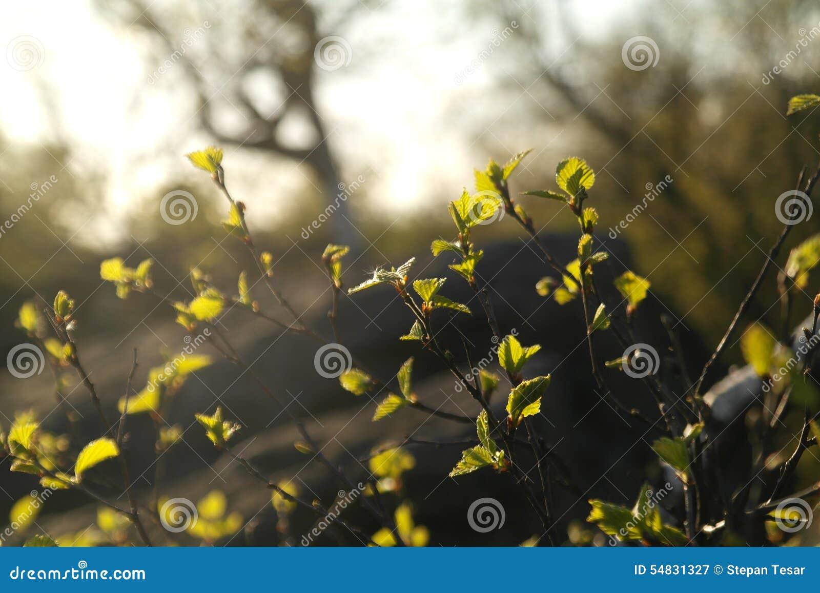 Крошечные ветви