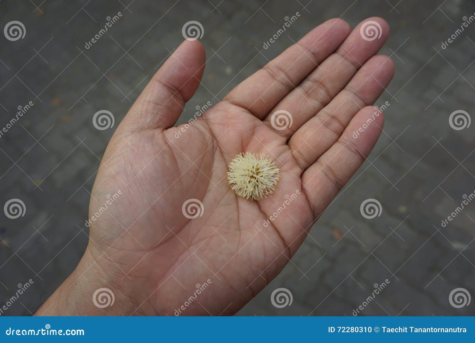 Download Крошечный цветок в наличии стоковое фото. изображение насчитывающей младенец - 72280310