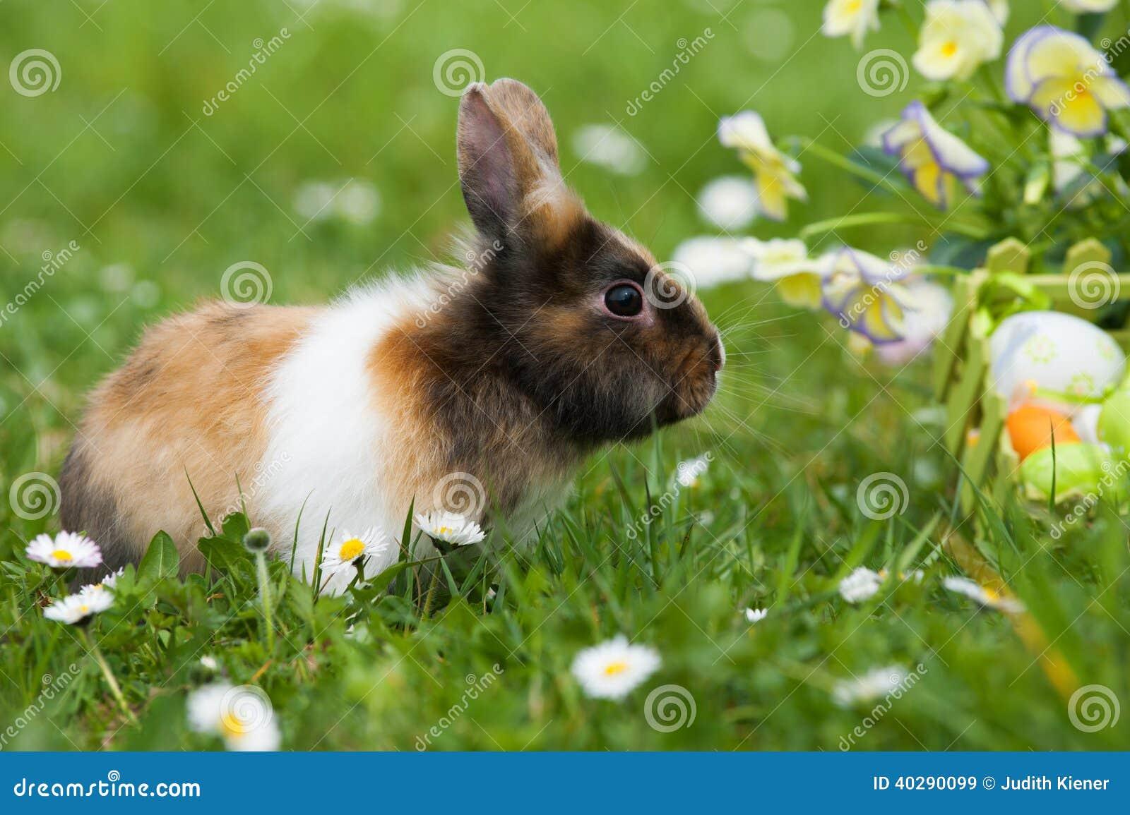 кролик пасхи