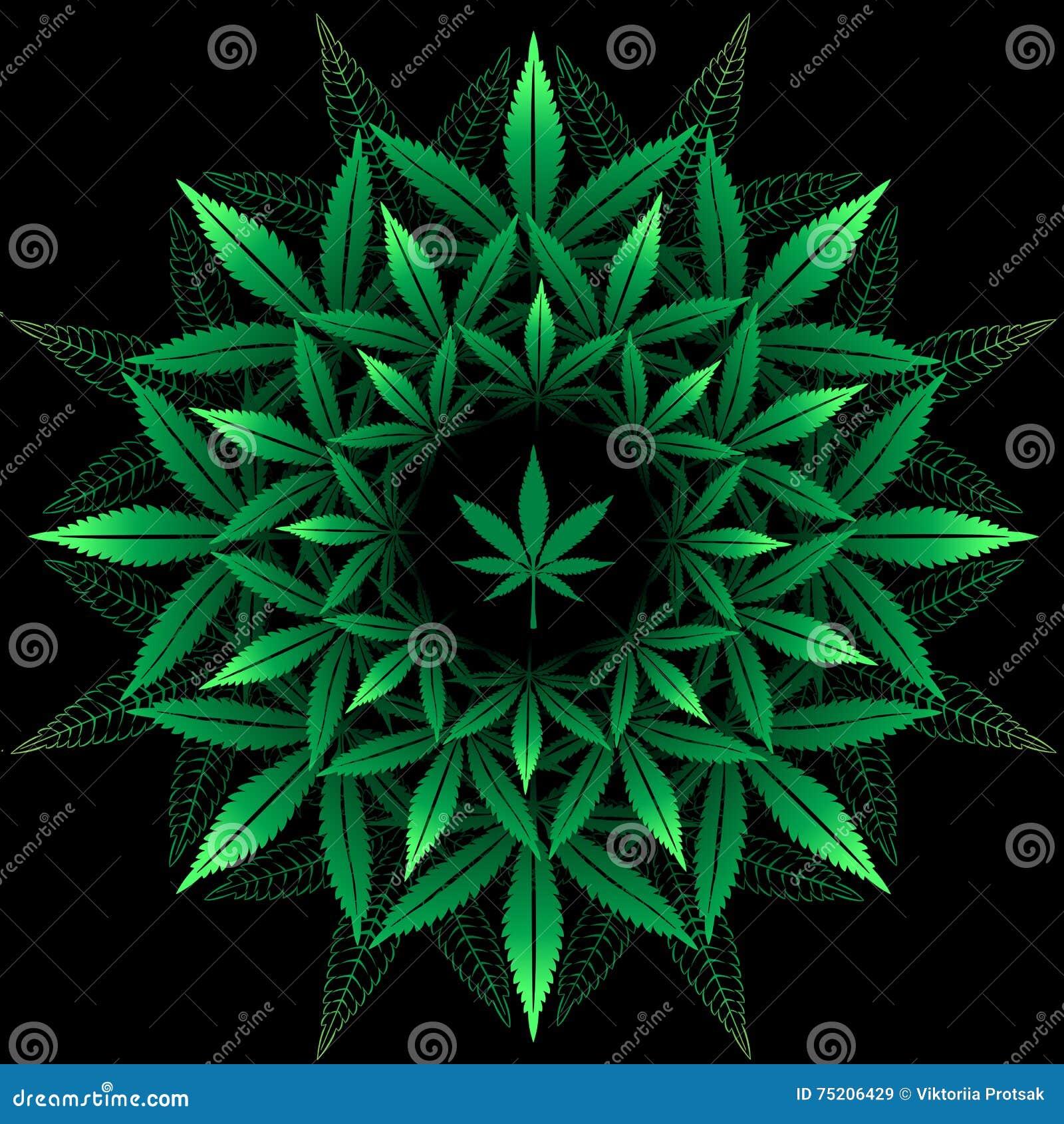 Конопля круглая картинка цветок похож на коноплю