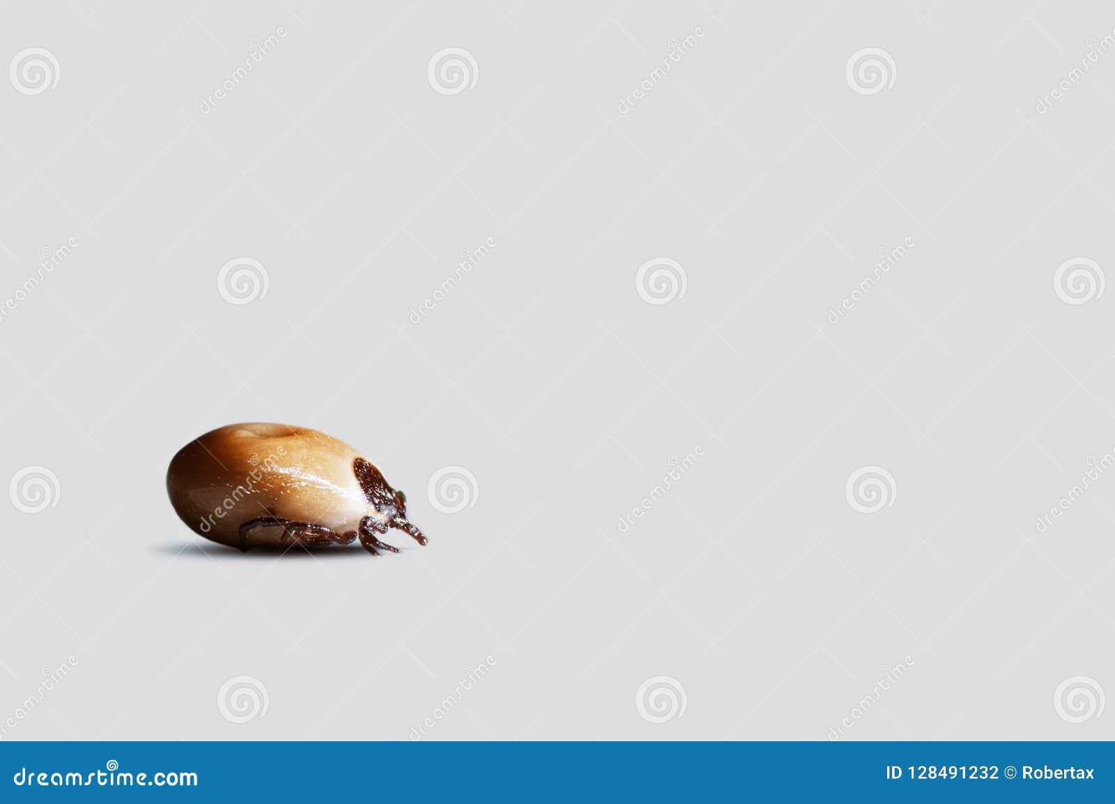 Крупный план поглощанного тикания изолированного на белой предпосылке