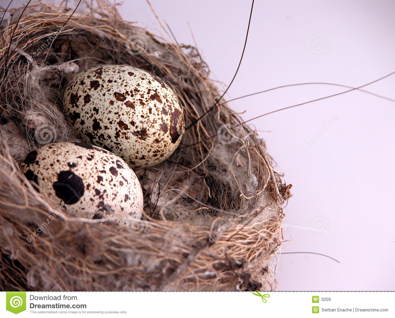 крупный план eggs гнездй