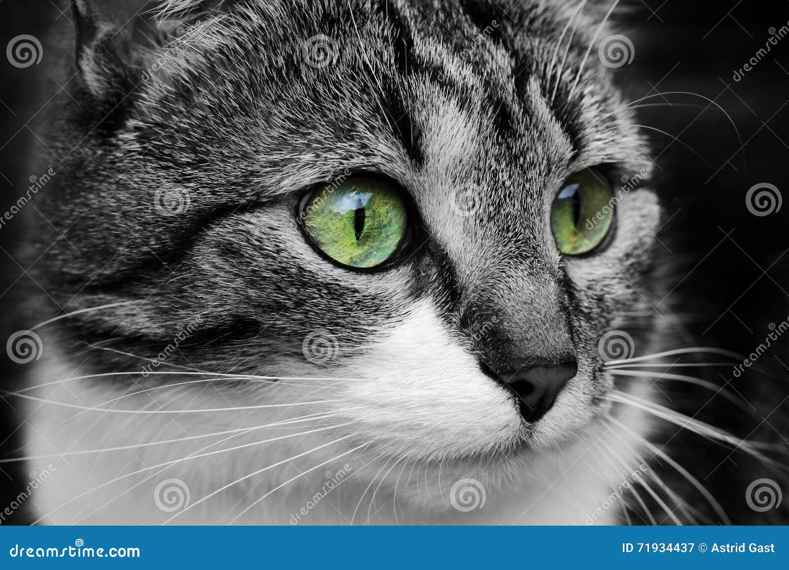 Крупный план глаз кота
