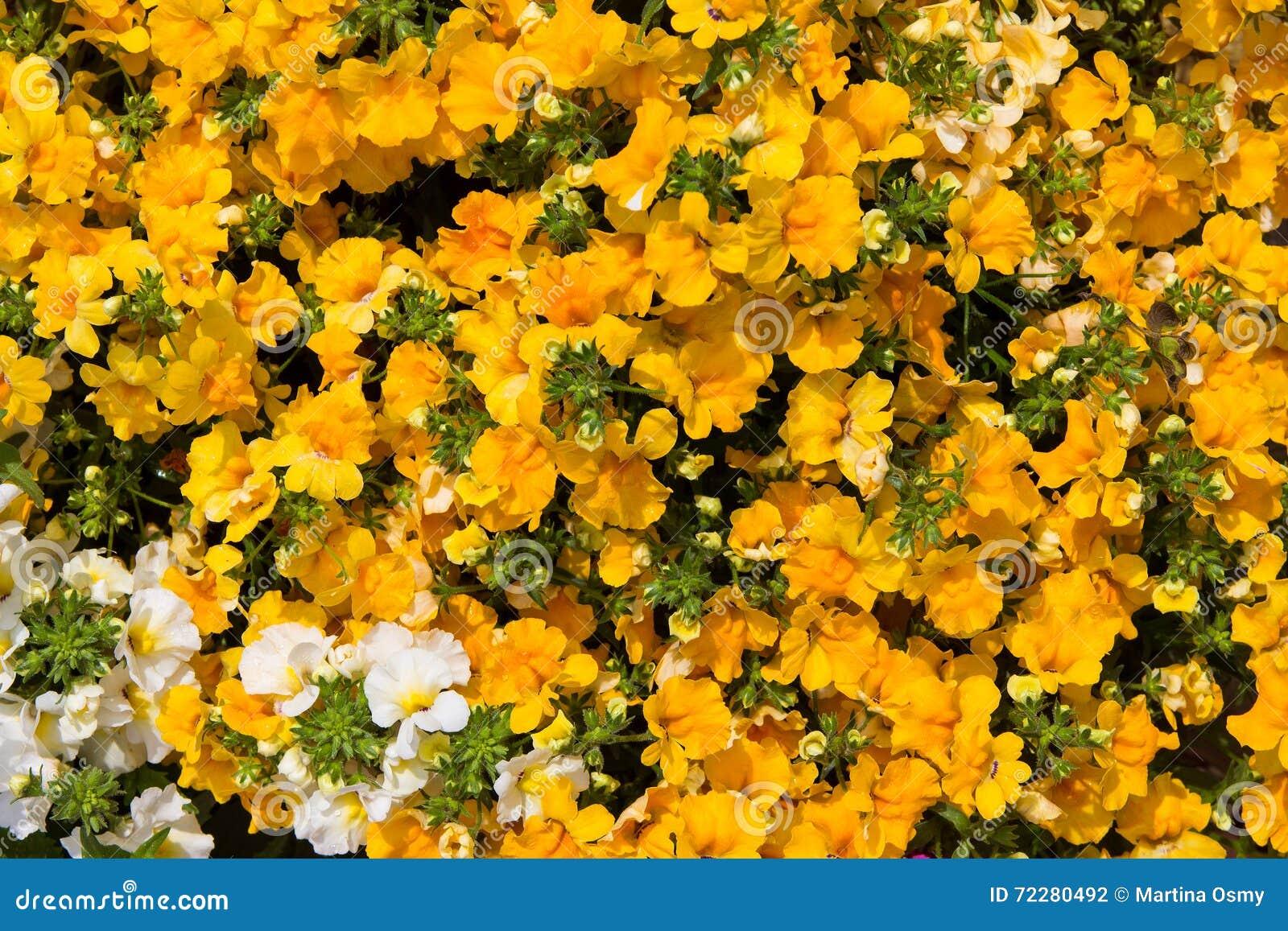 Download Крупный план живых цветений Стоковое Фото - изображение насчитывающей живо, никто: 72280492
