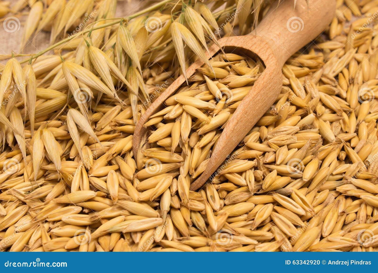 зерна овса как употреблять от холестерина