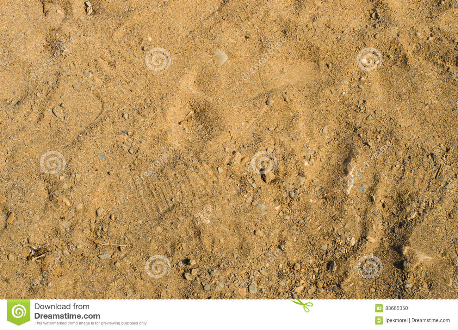 Крупный план на пляже фото фото 263-867