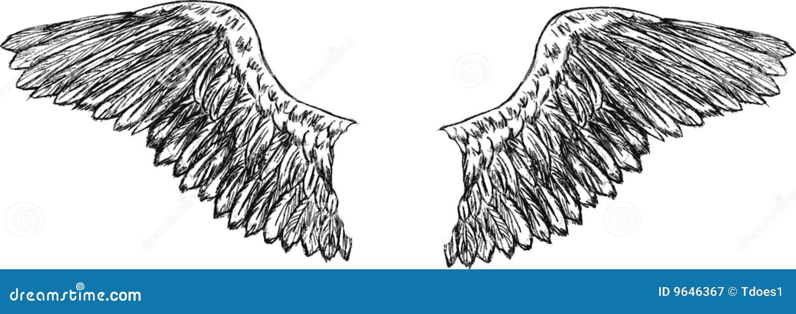 Нарисованное крыло орла