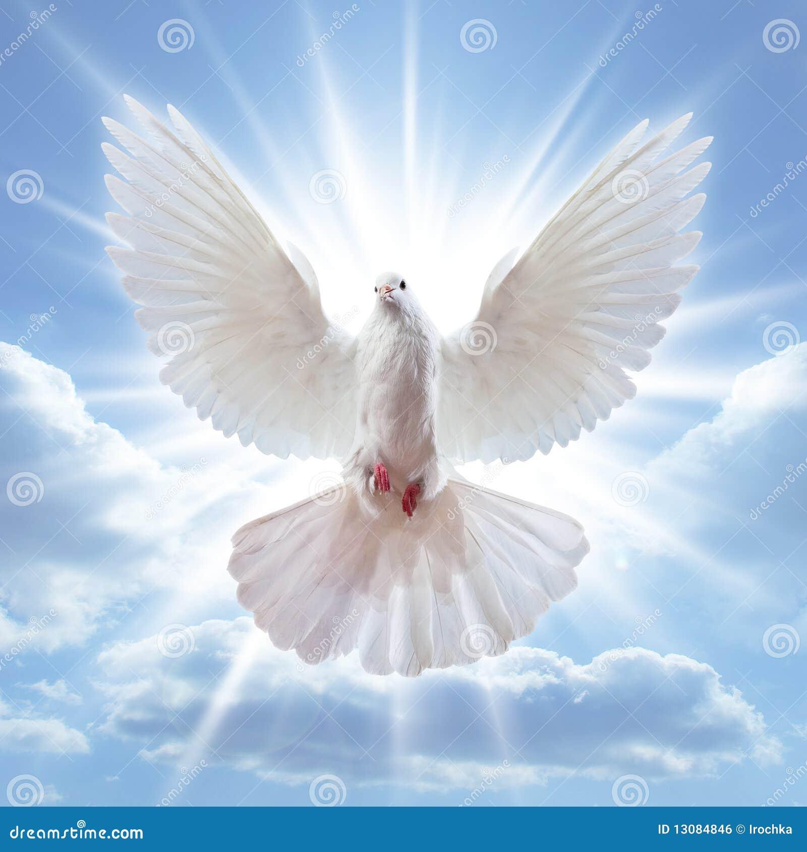 крыла dove воздуха открытые широкие