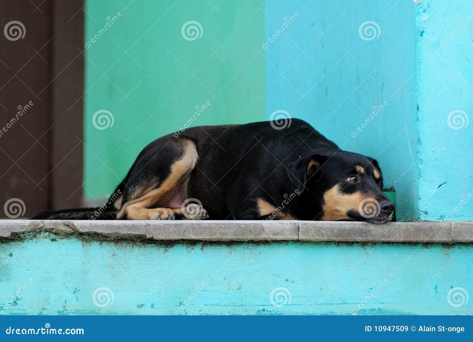 крылечко varadero собаки