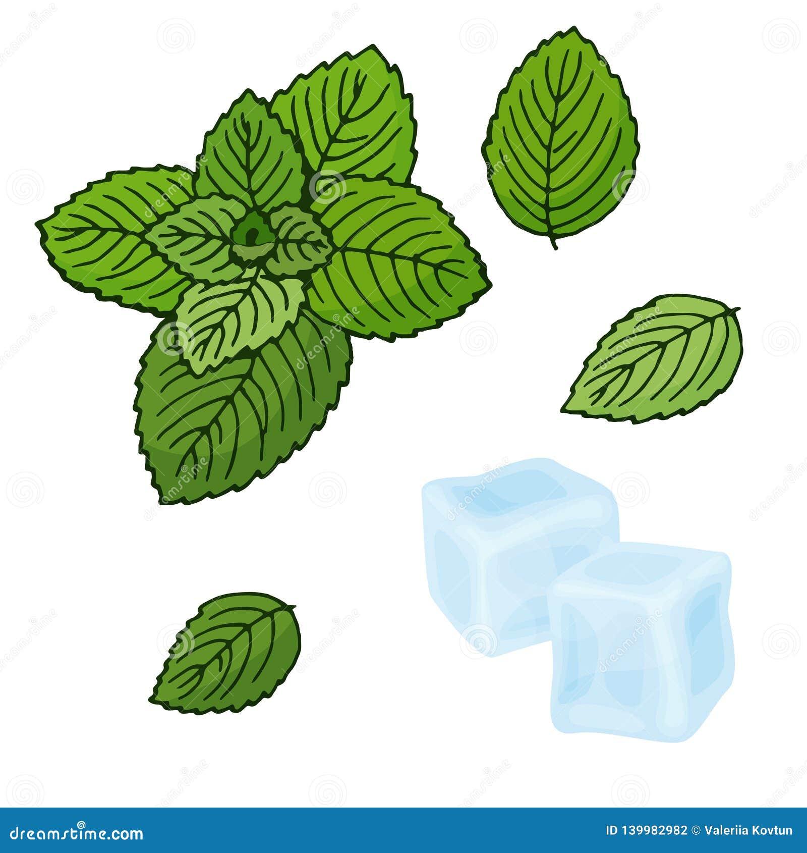 Кубы мяты и льда также вектор иллюстрации притяжки corel Пипермент на белой предпосылке Изолированные предметы Установите для осв
