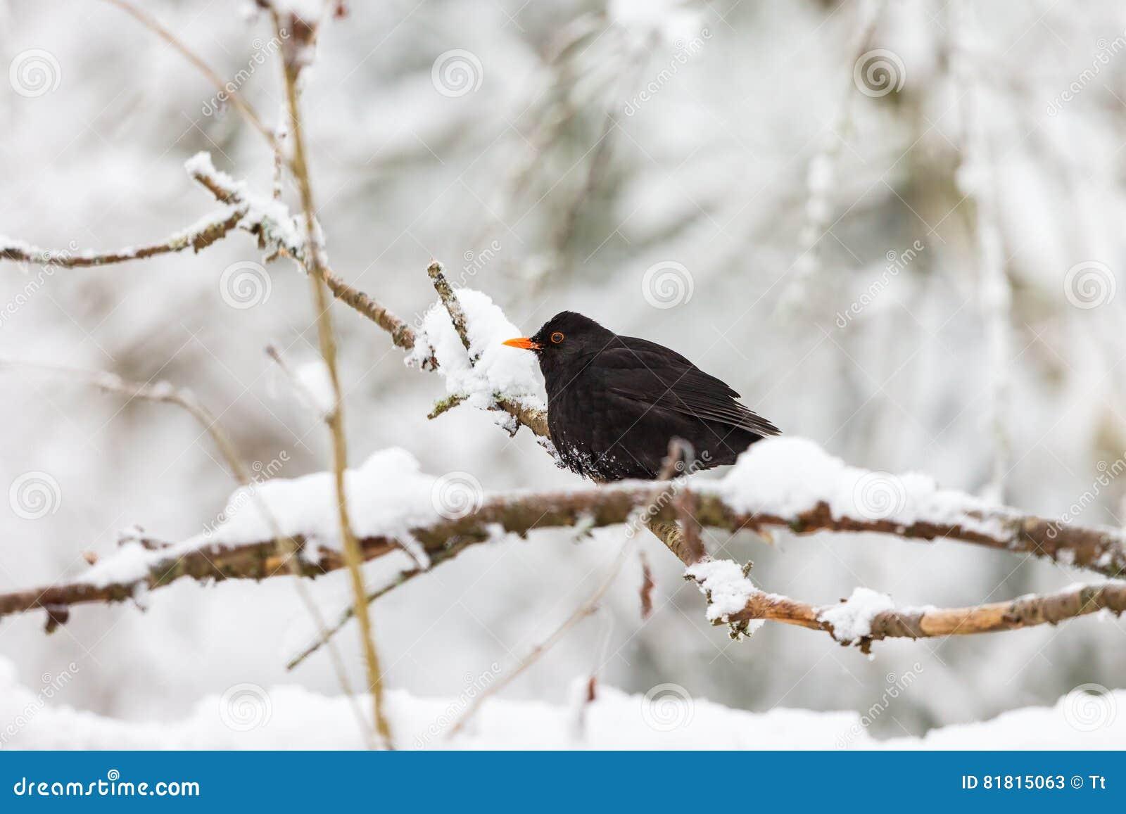 Кукушка на древесинах снежных зимы