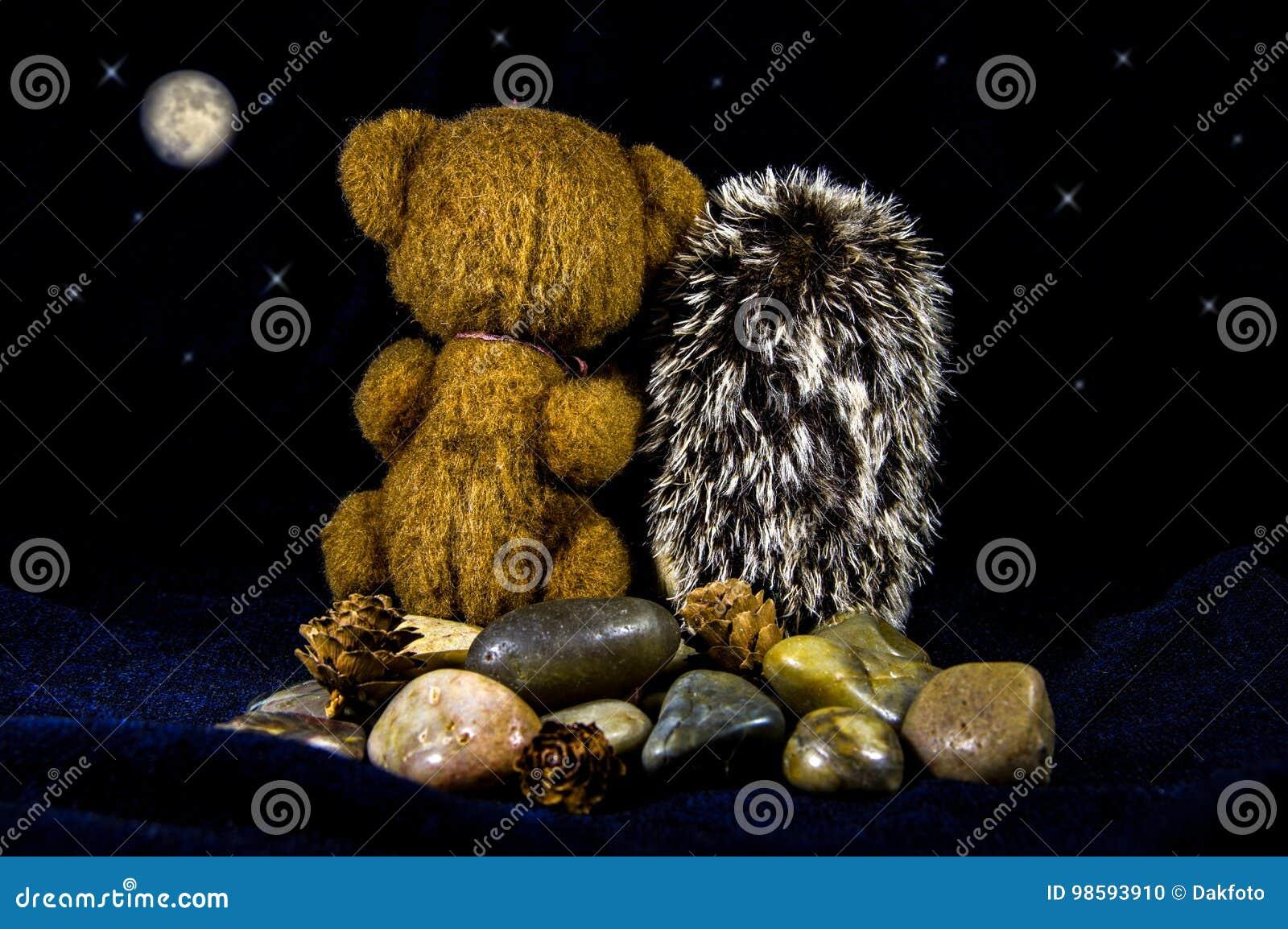 Картинки с котами персидскими его