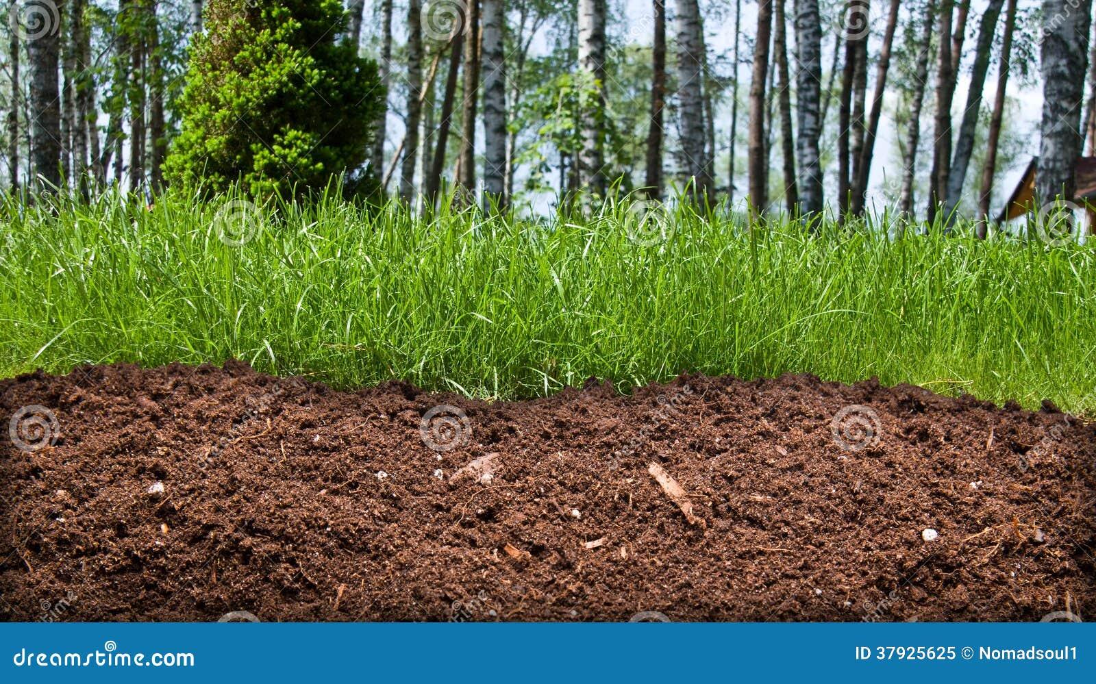 Кусок почвы