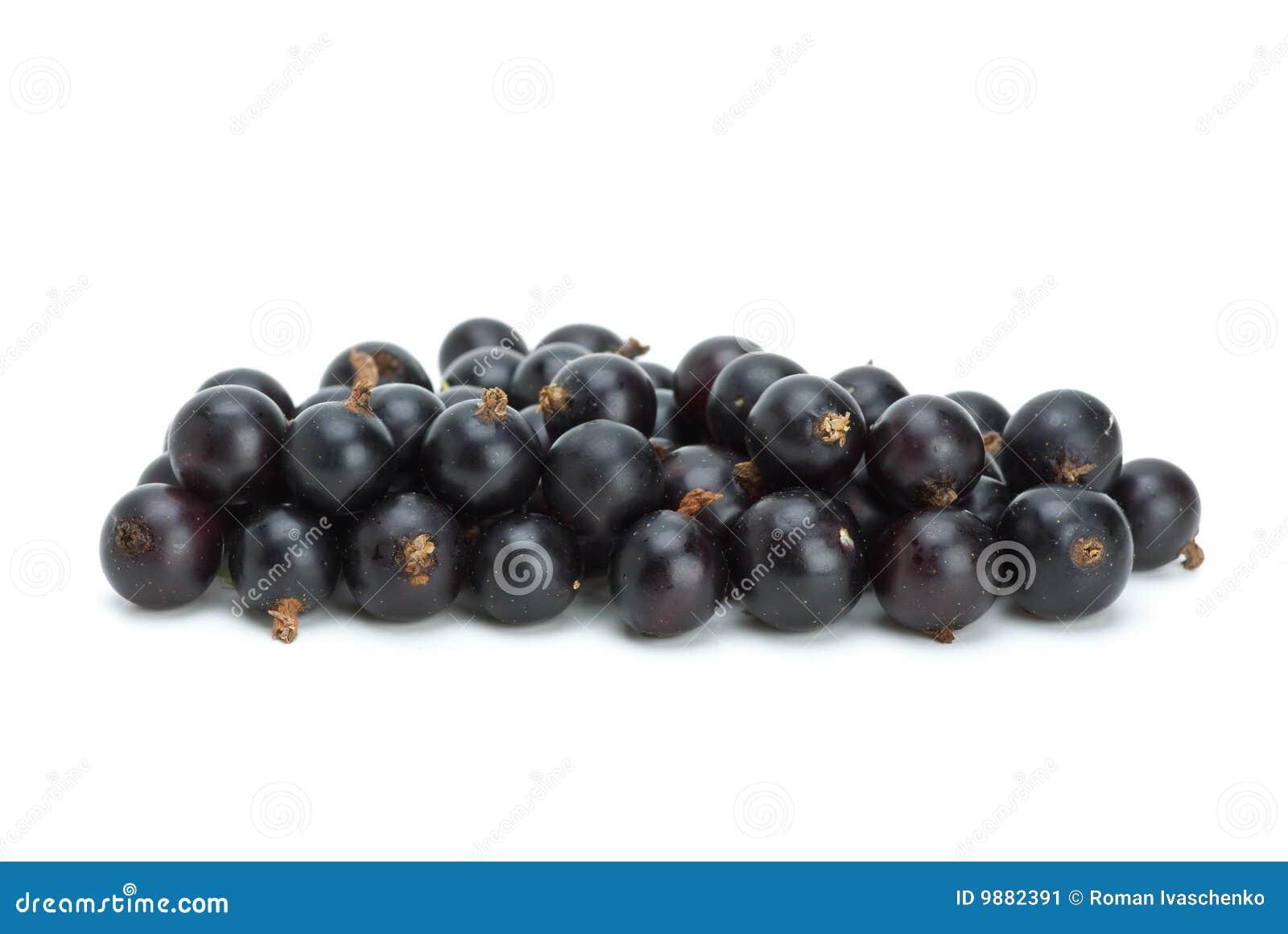куча blackcurrant ягод малая