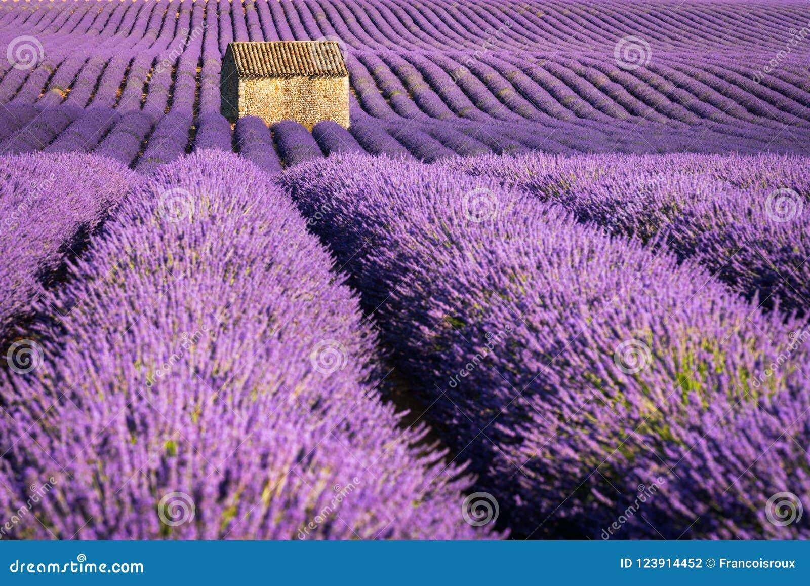 Лаванда fields в Valensole на заходе солнца с каменным домом в лете Alpes-de-Haute-Провансаль, Франция