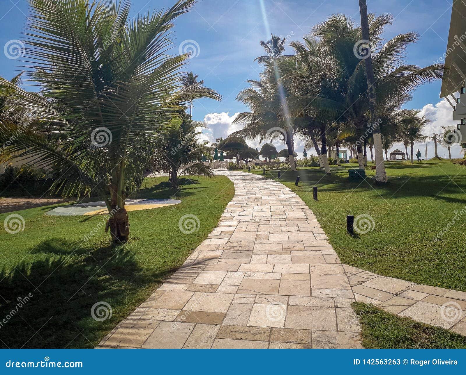 Ладони и деревья в плоском курорте Бразилии