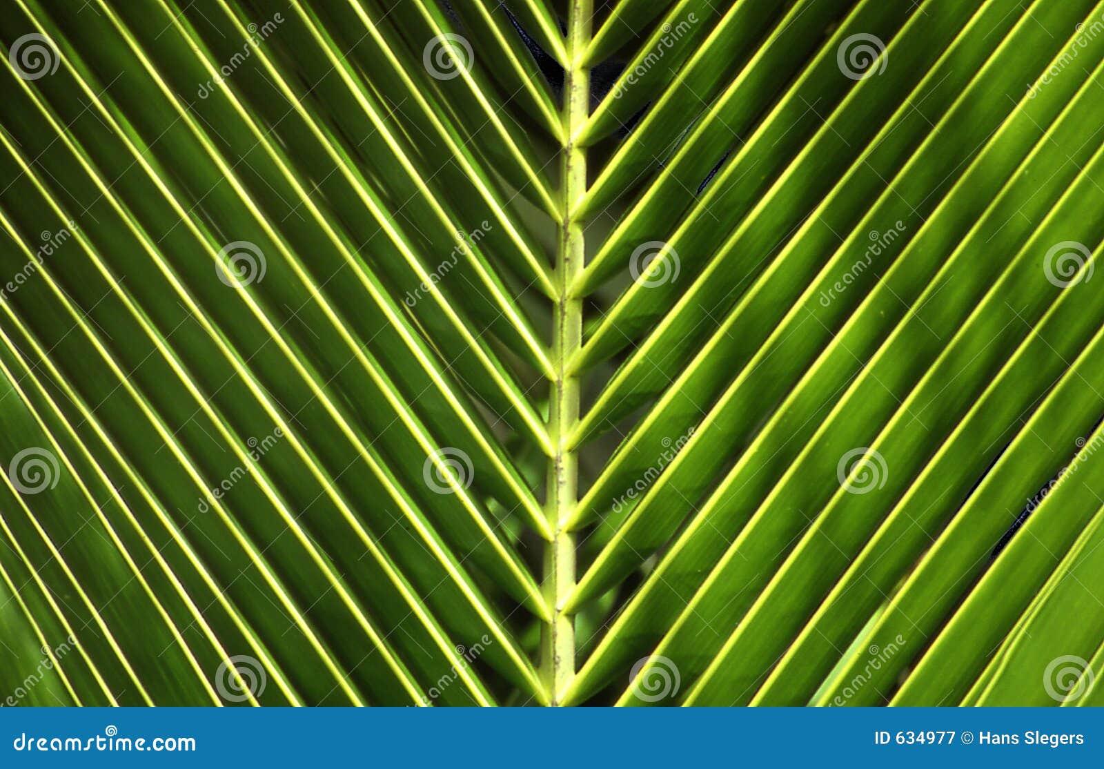Download ладонь листьев стоковое изображение. изображение насчитывающей тропическо - 634977