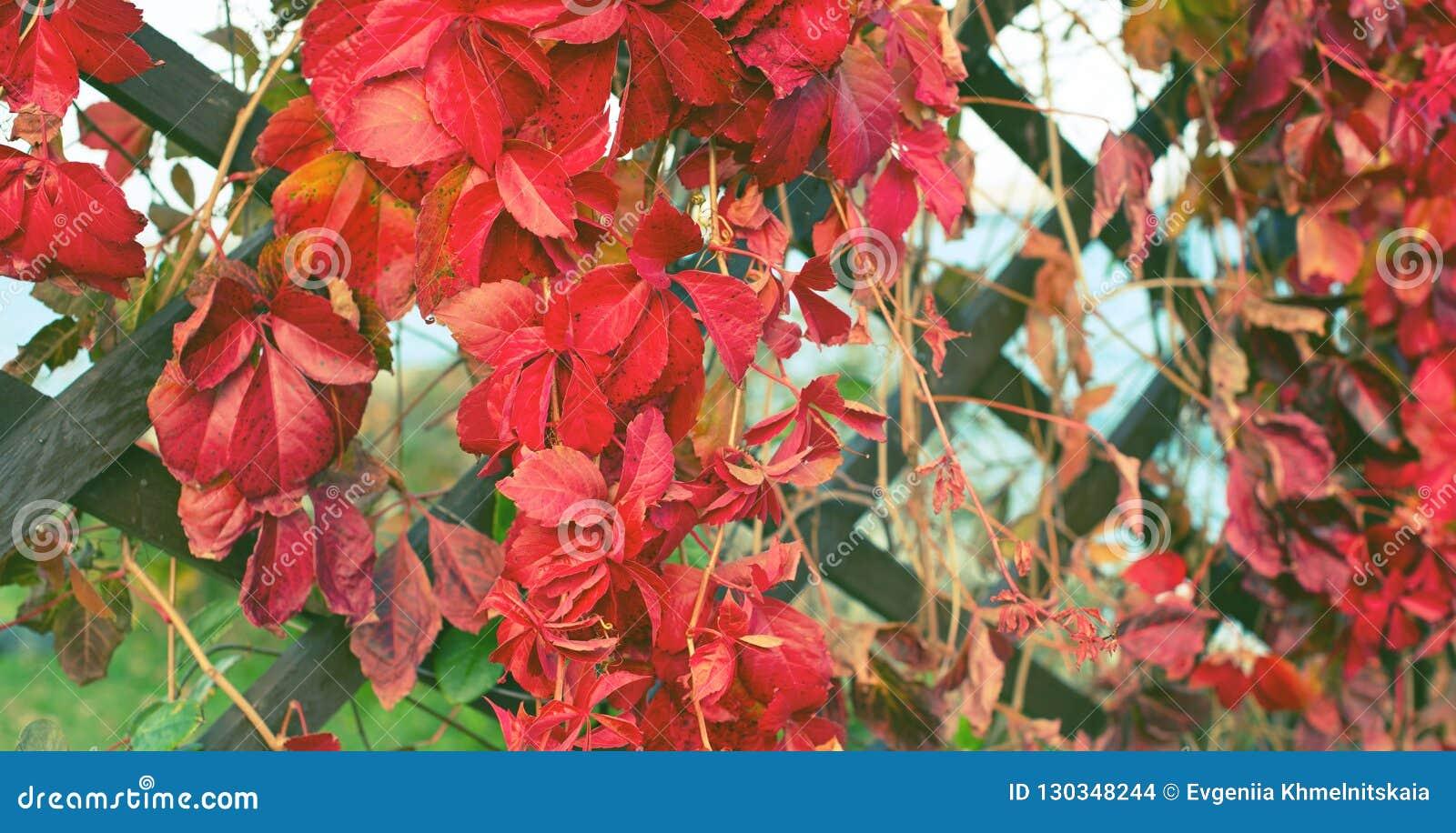 Ландшафта осени загородки природного парка листвы завода осени знамени фокус красного деревянного ретро красивого выборочный
