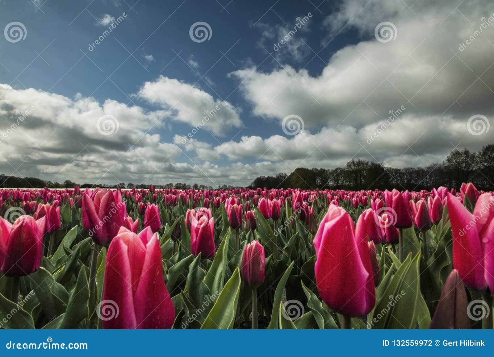 Ландшафты в Нидерланд, голландские ландшафты