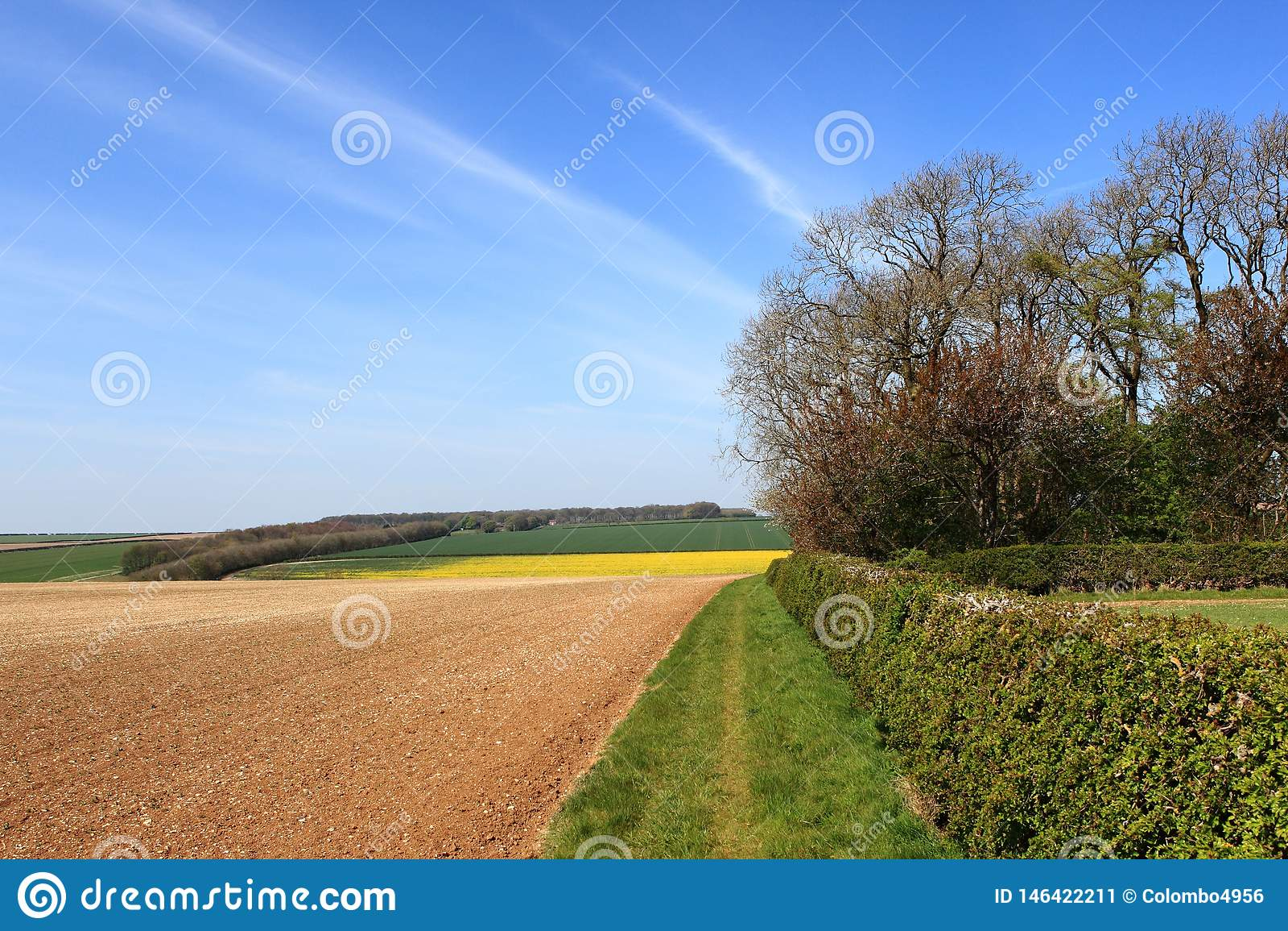 Ландшафт весеннего времени с красочными полями заплатки и цветя деревьями