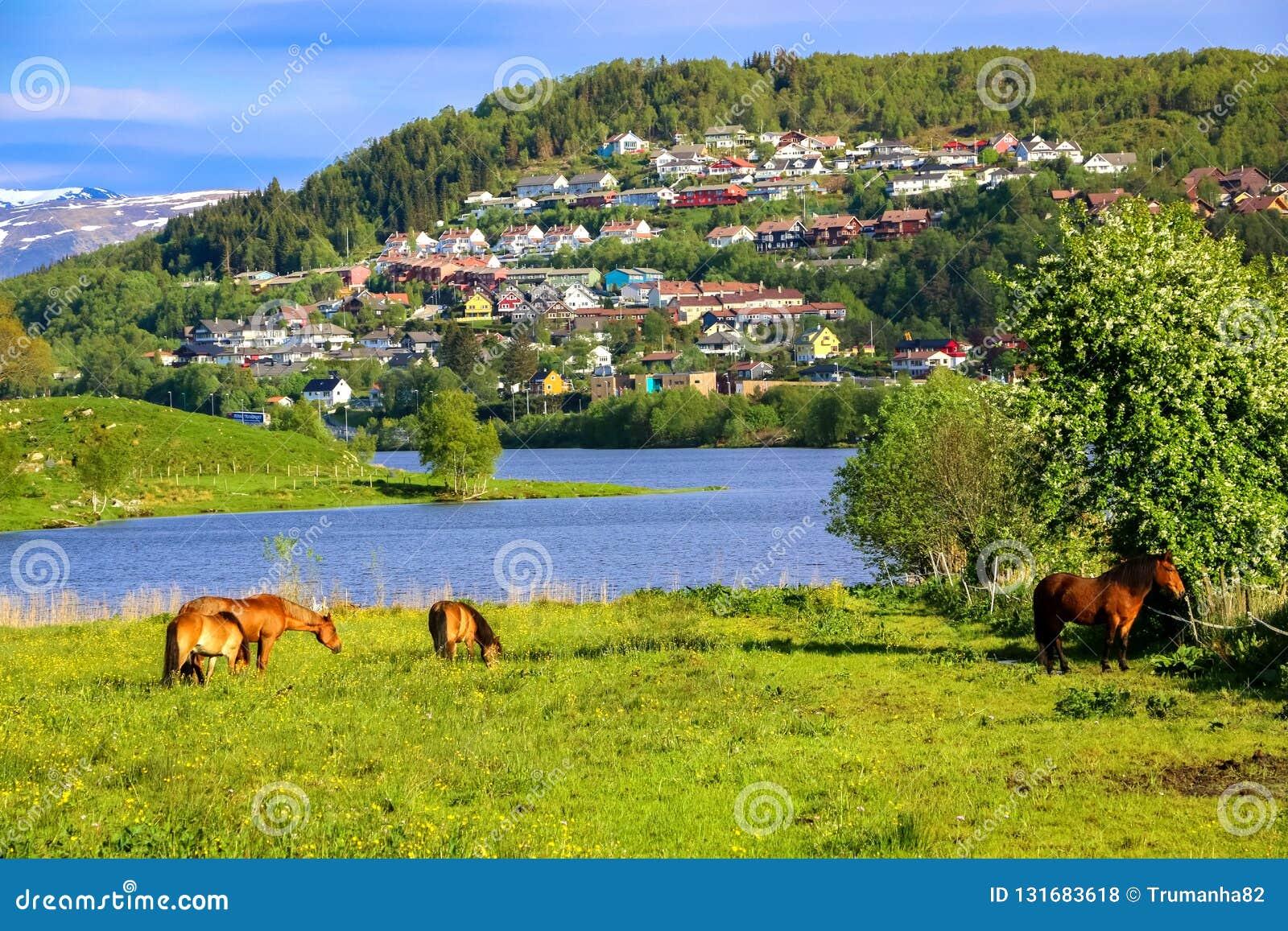 Ландшафт весны с лошадями есть траву в зеленом луге озером в солнечном свете
