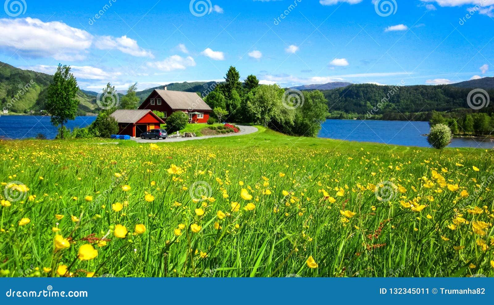 Ландшафт весны с лугом диких желтых цветков лютика и красивым красным домом озером в солнечном свете