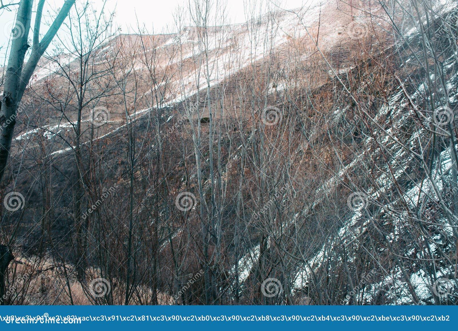 Ландшафт весны с плавя снегом и соснами