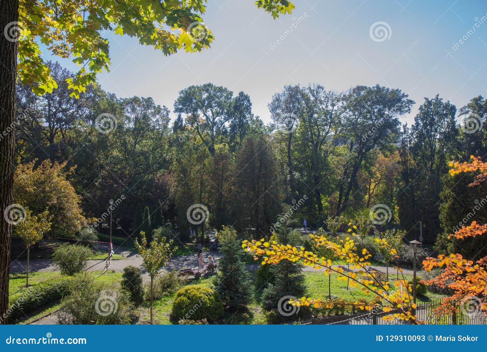 Ландшафт в октябре осени красочные desiduous деревья - солнечный взгляд осени Сад академичного университета Fomin ботанический дл