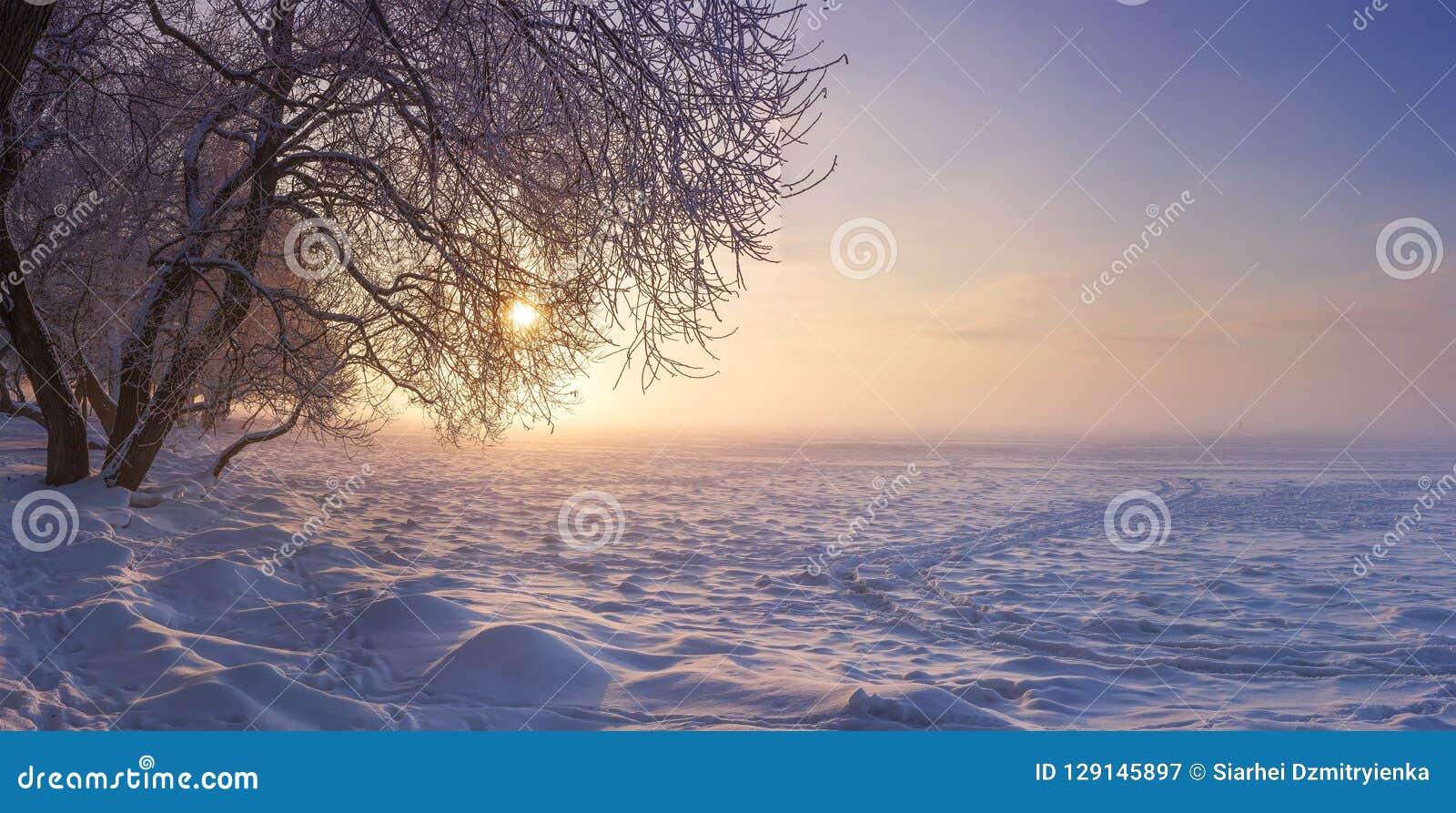 Ландшафт зимы в вечере на заходе солнца Снег, заморозок в январе предпосылка легкая редактирует природу изображения для того чтоб