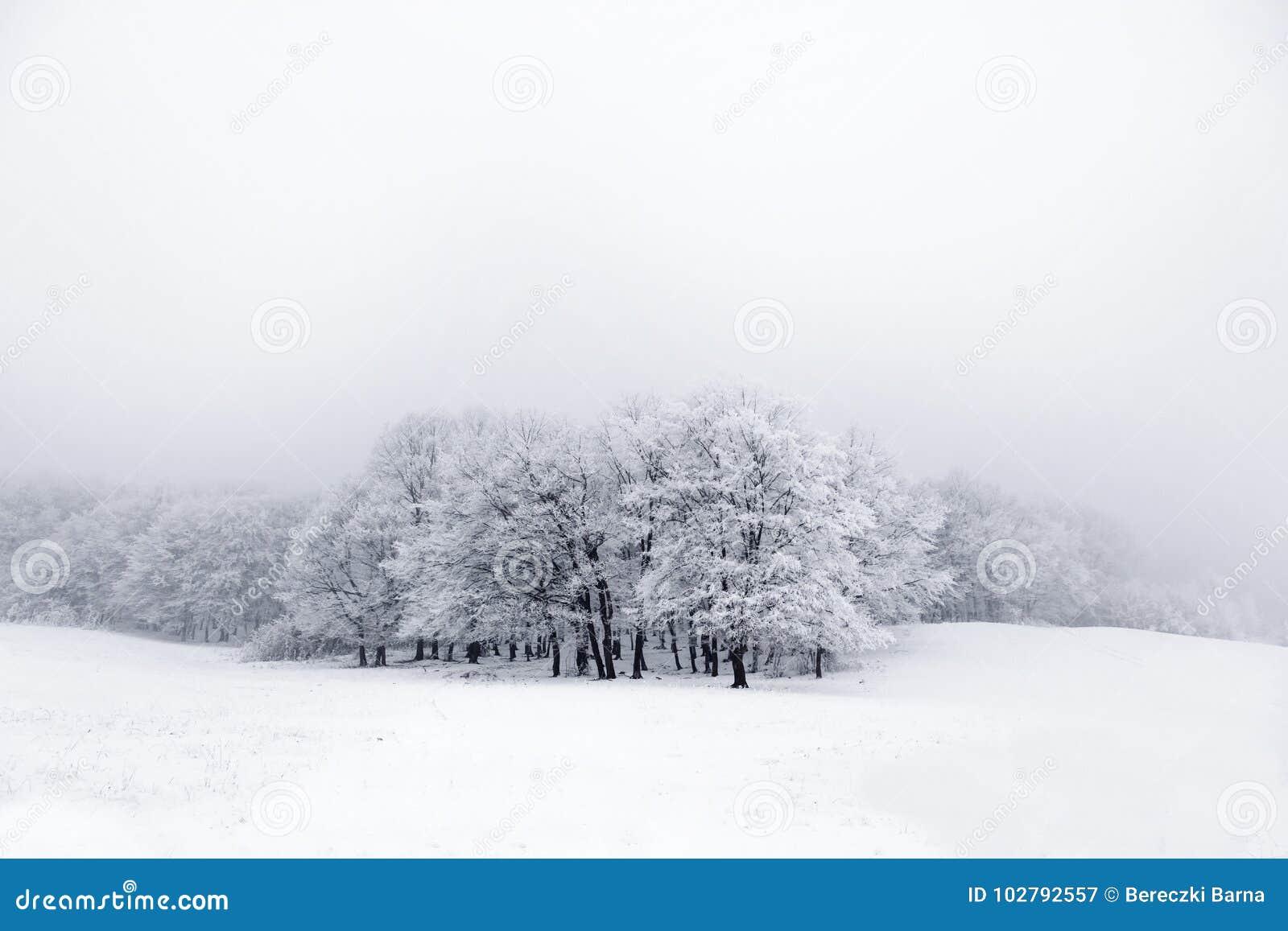 Ландшафт зимы: край леса в заморозке и морозном тумане